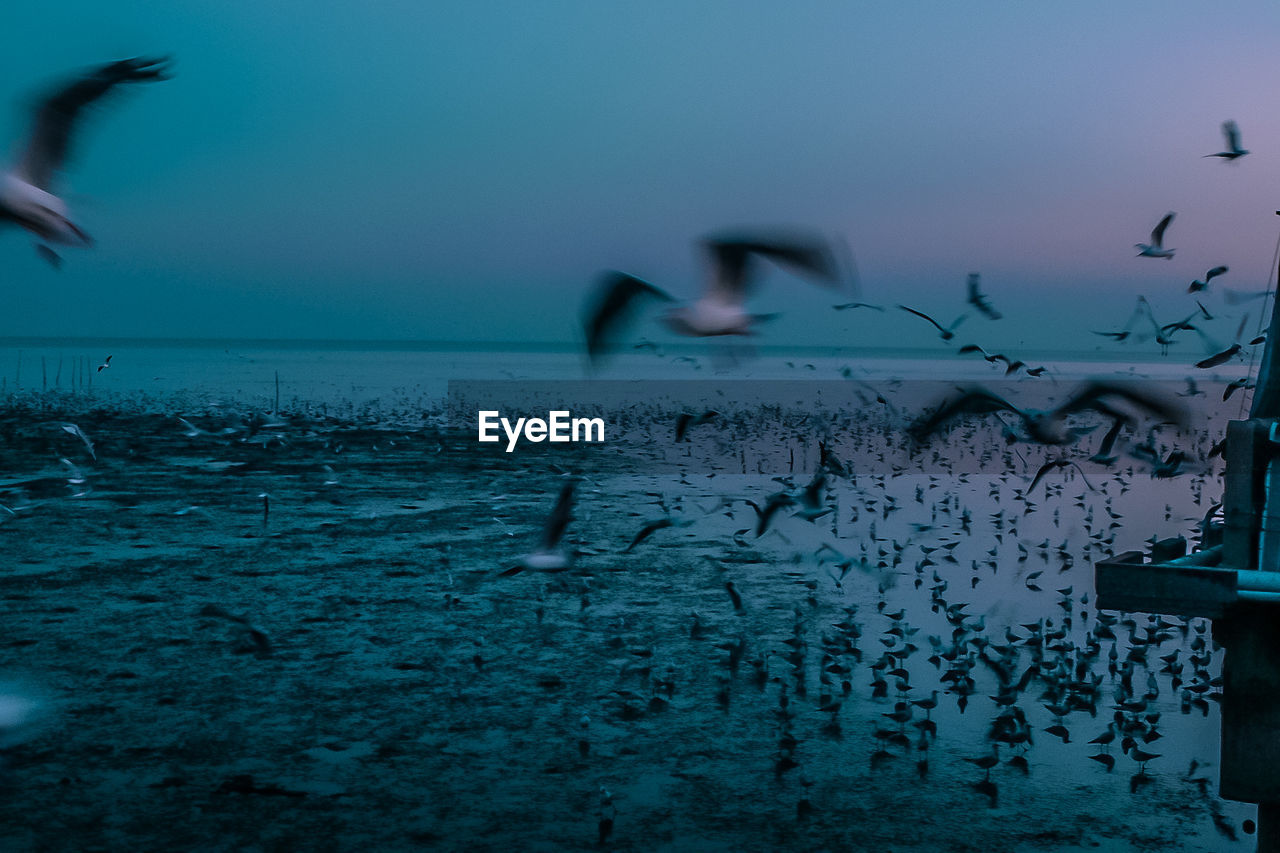 water, group of animals, sea, sky, vertebrate, animals in the wild, bird, animal themes, animal, horizon over water, flying, beauty in nature, motion, nature, animal wildlife, horizon, blurred motion, scenics - nature, large group of animals, outdoors, flock of birds