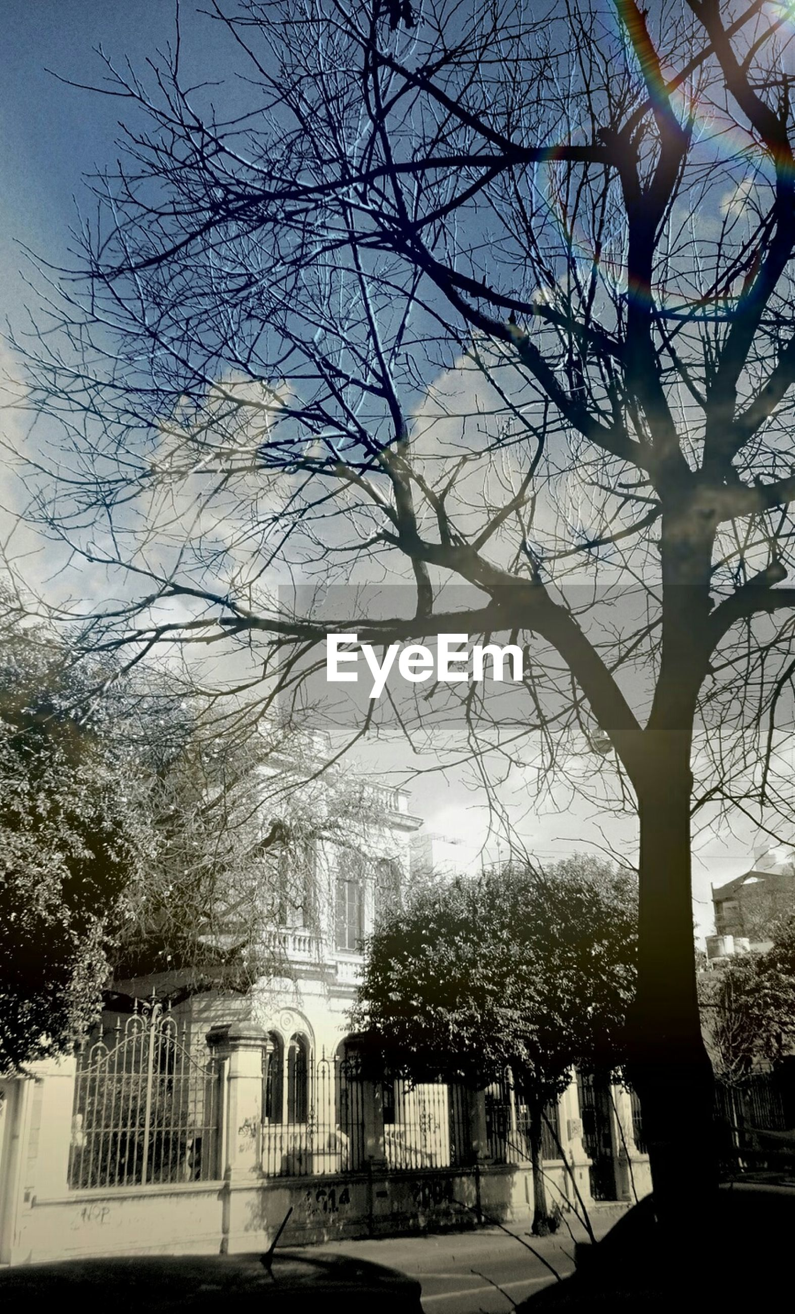 BARE TREES WITH BUILDINGS IN BACKGROUND