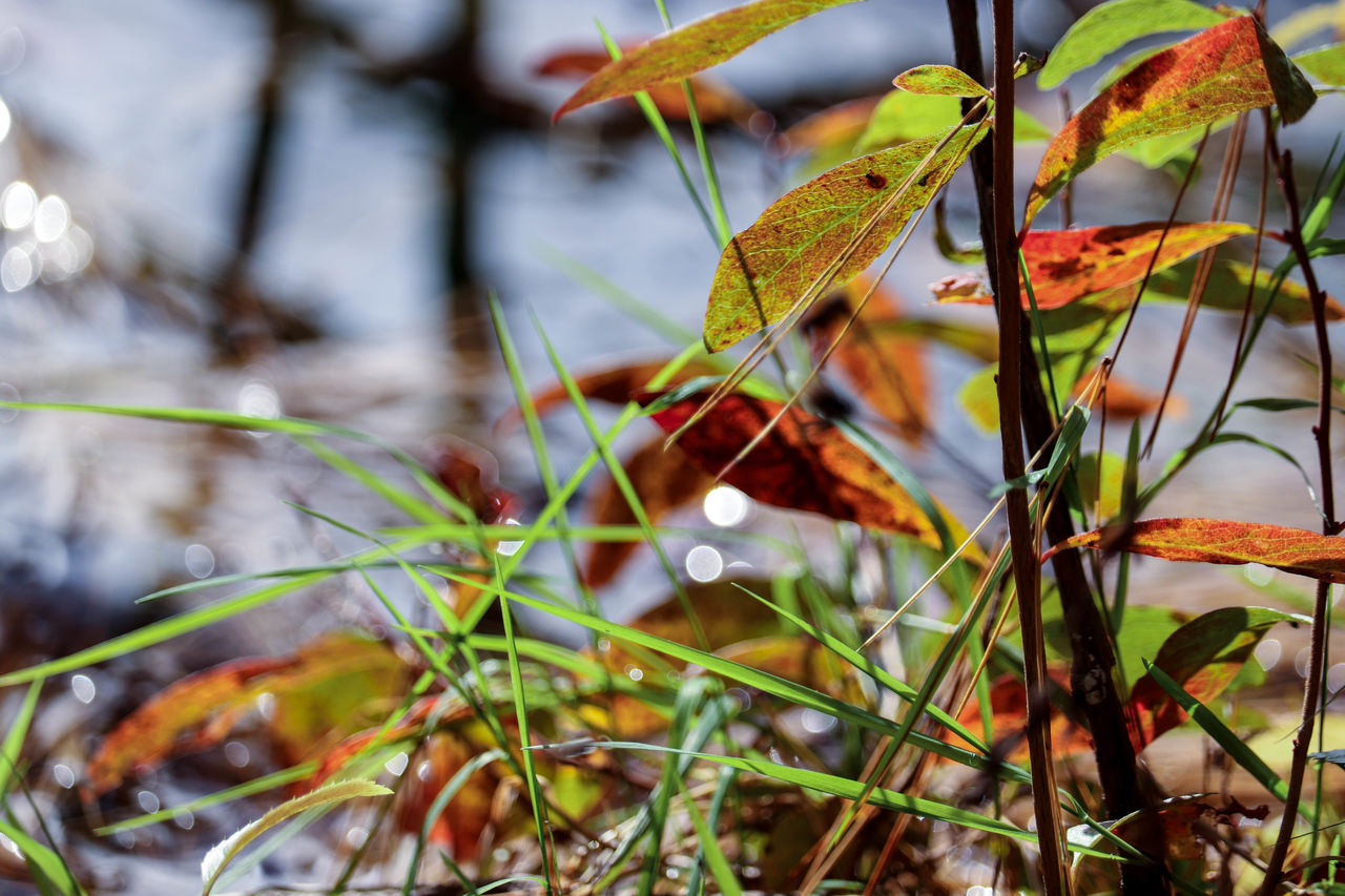 plant, growth, plant part, leaf, close-up, selective focus, nature, no people, beauty in nature, day, focus on foreground, green color, outdoors, freshness, food and drink, tree, food, vulnerability, autumn, fragility, change, leaves