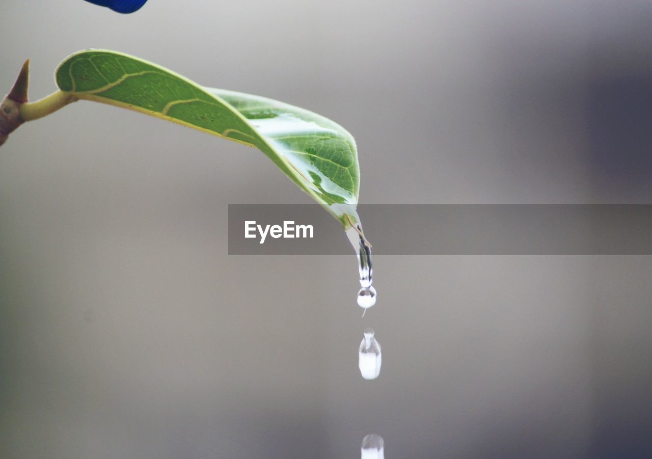 drop, water, leaf, plant part, close-up, nature, beauty in nature, plant, wet, focus on foreground, no people, freshness, growth, purity, green color, outdoors, fragility, day, selective focus, dew, raindrop, running water