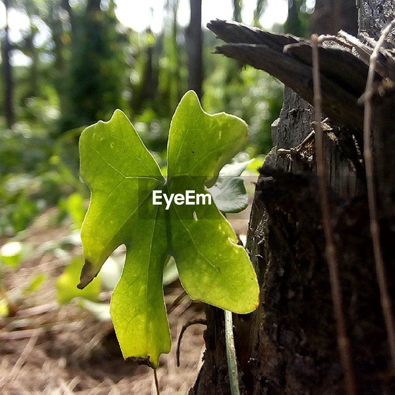 plant part, leaf, plant, green color, growth, focus on foreground, close-up, day, tree, no people, nature, beauty in nature, outdoors, land, tranquility, selective focus, forest, leaves, sunlight, freshness