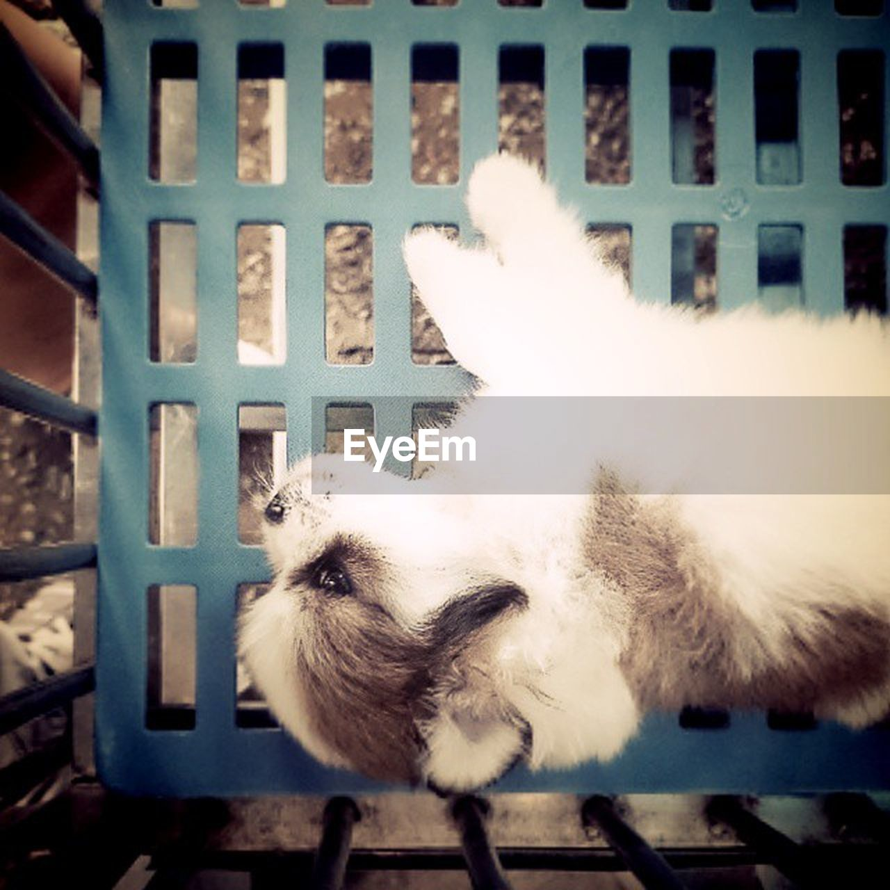 animal themes, domestic animals, pets, one animal, domestic cat, mammal, cage, indoors, feline, trapped, no people, day, security bar, close-up, persian cat