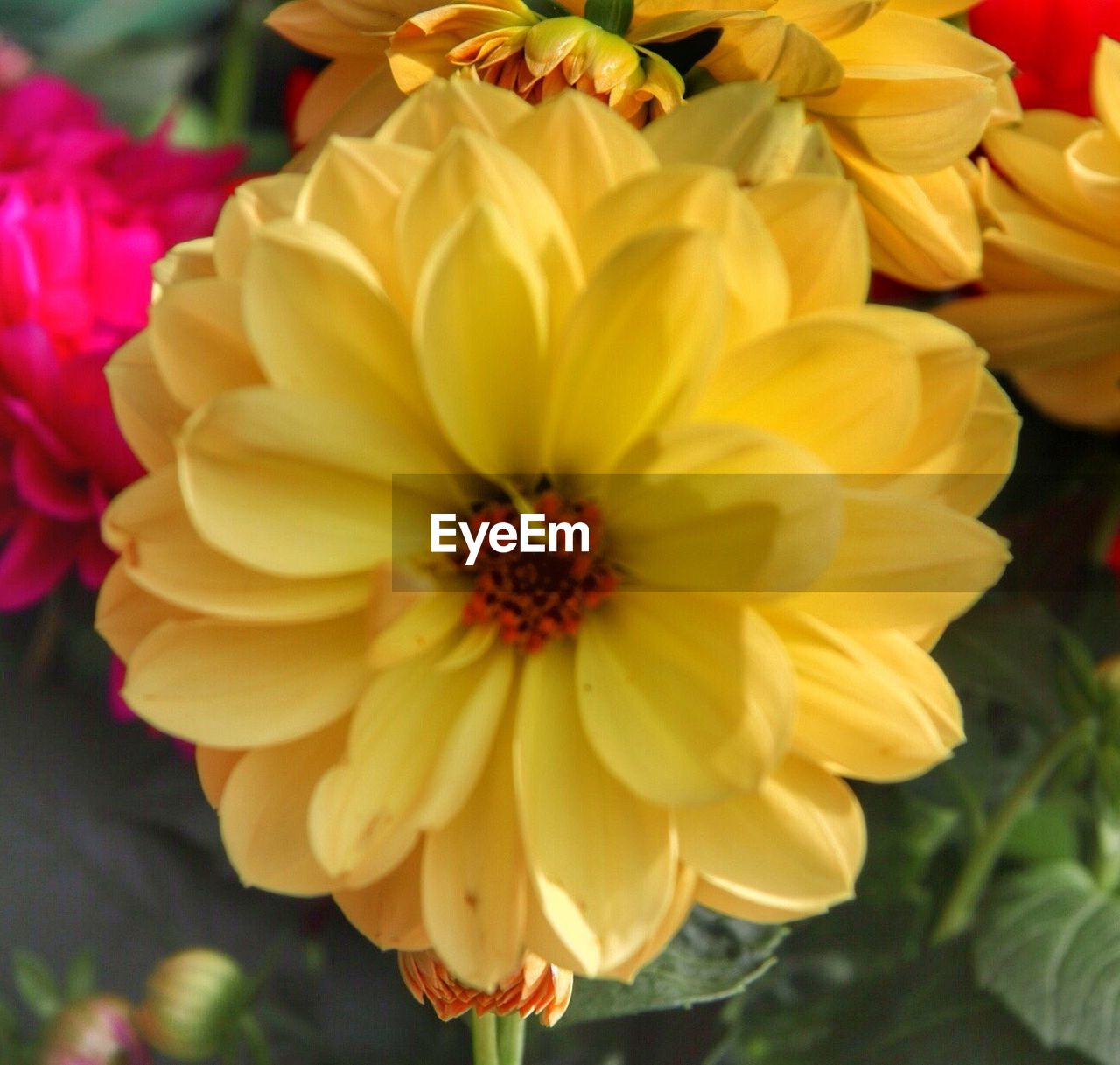 flower, petal, flower head, fragility, freshness, yellow, beauty in nature, blooming, growth, nature, close-up, plant, day, outdoors, no people
