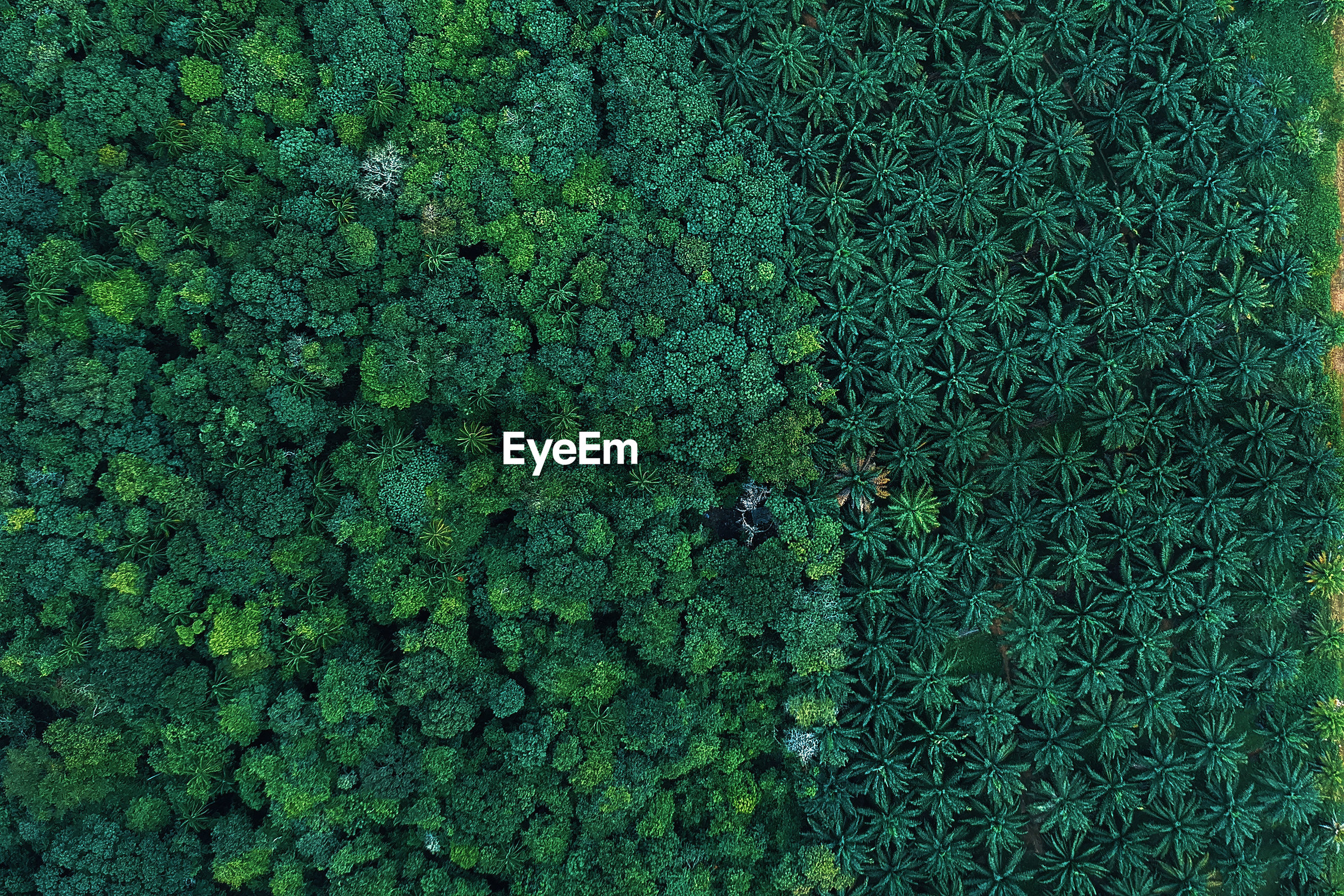 Full frame shot of trees growing on land in forest