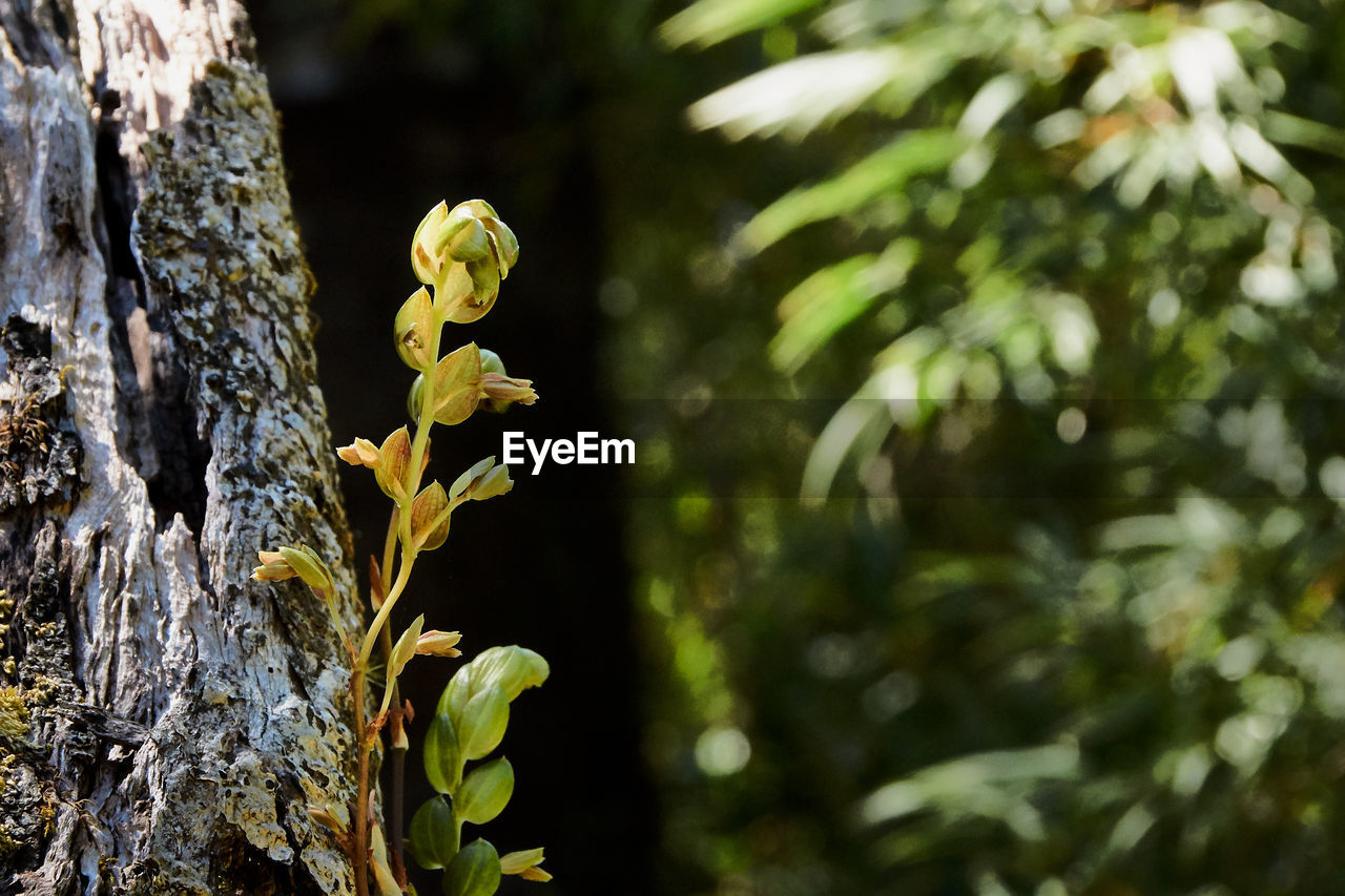 plant, growth, focus on foreground, beauty in nature, tree trunk, nature, close-up, tree, trunk, day, no people, fragility, yellow, vulnerability, flower, flowering plant, outdoors, sunlight, freshness, selective focus, flower head, bark, lichen