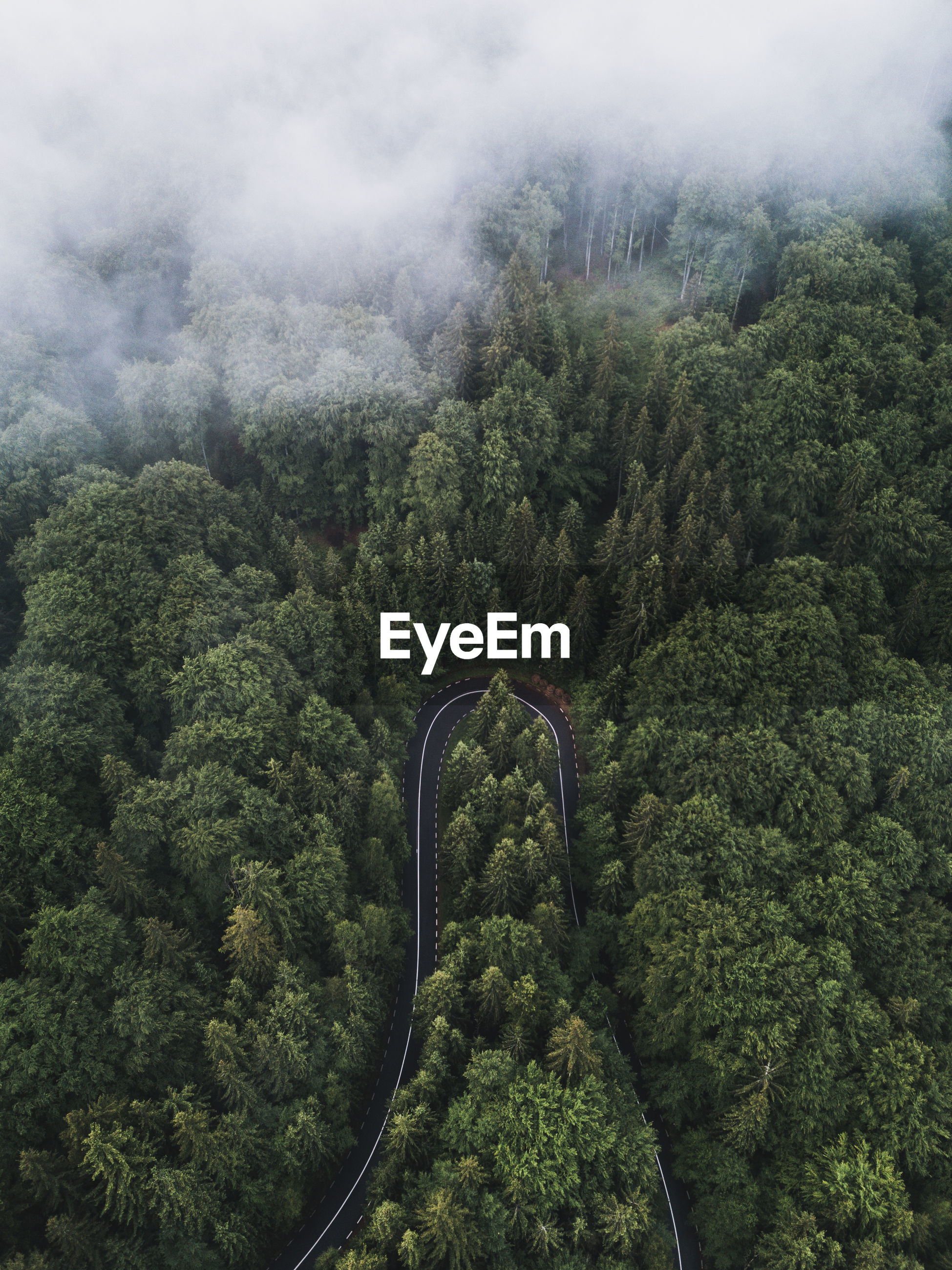 forest, plant, tree, environment, aerial photography, green, nature, scenics - nature, beauty in nature, landscape, rainforest, land, mountain, no people, growth, high angle view, aerial view, natural environment, tranquility, fog, non-urban scene, foliage, cloud, day, lush foliage, tranquil scene, outdoors, sky, jungle, transportation, travel, mountain range, idyllic, vegetation
