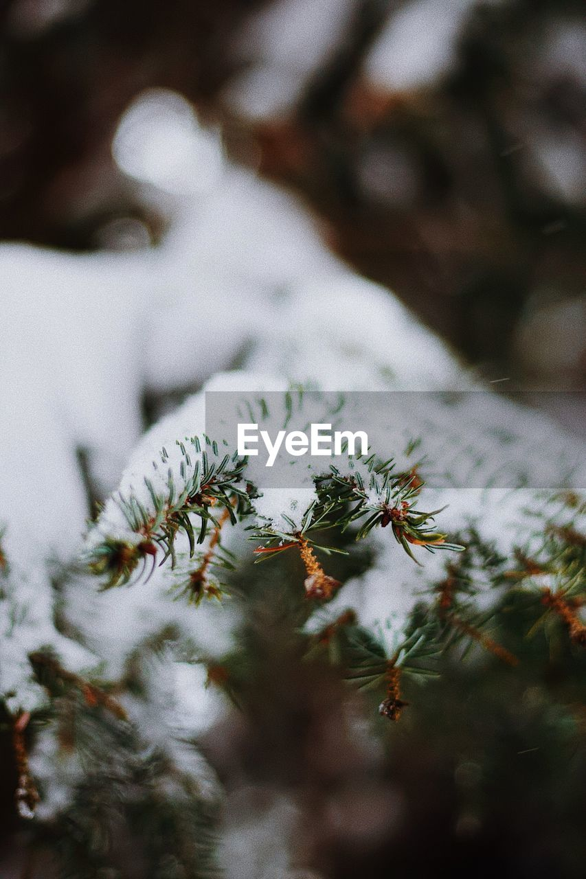 snow, winter, cold temperature, nature, weather, no people, frozen, growth, beauty in nature, outdoors, day, close-up, tranquility, tree