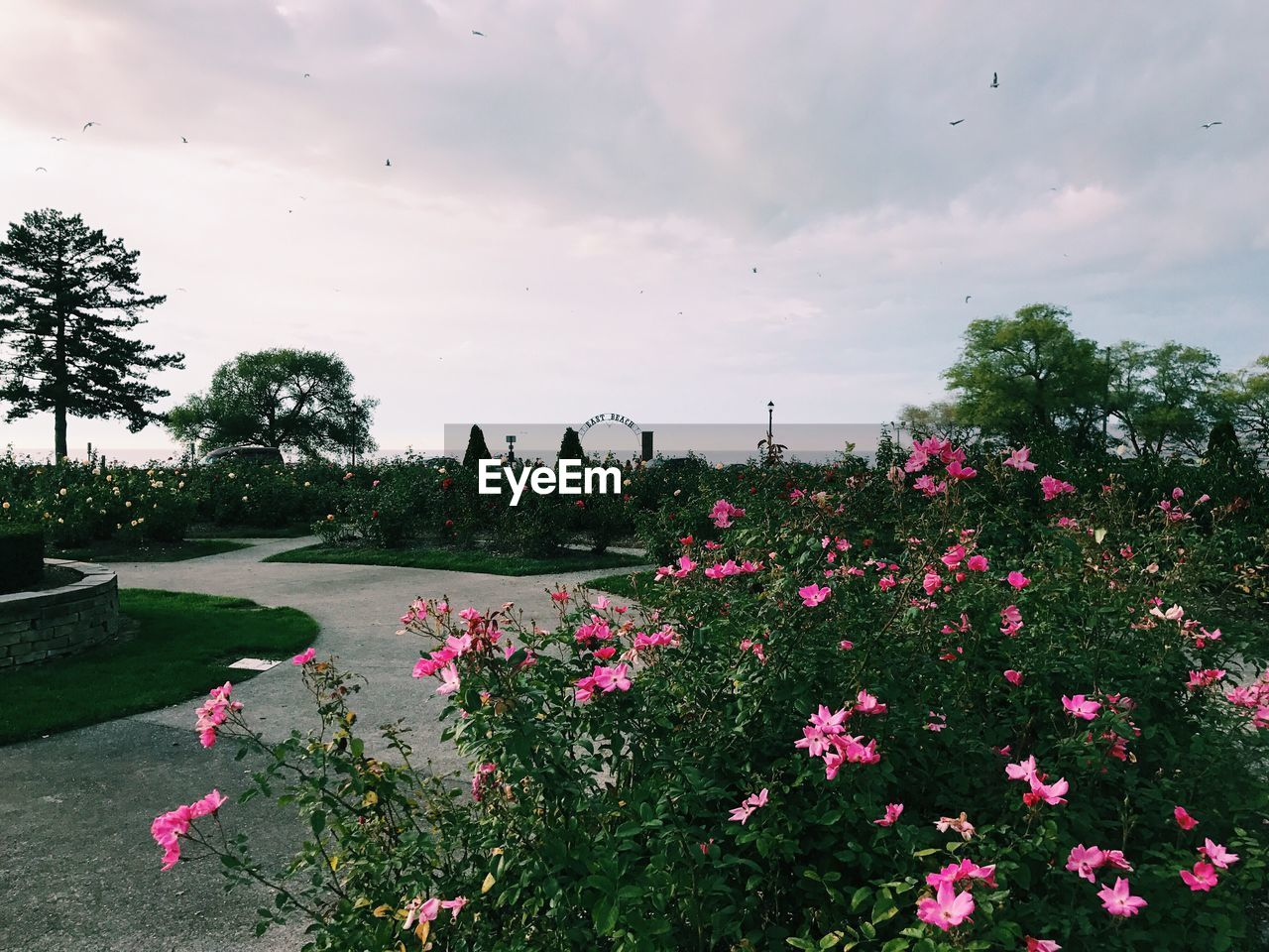 plant, flowering plant, flower, sky, beauty in nature, cloud - sky, nature, pink color, growth, tree, freshness, day, fragility, vulnerability, no people, park, park - man made space, outdoors, tranquility, tranquil scene