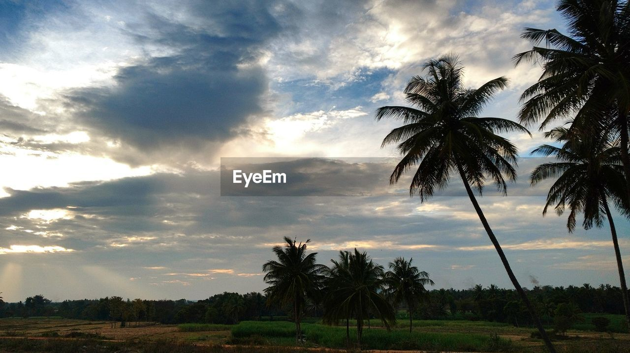 palm tree, tree, sky, cloud - sky, scenics, tranquility, sunset, beauty in nature, tranquil scene, nature, no people, silhouette, beach, outdoors, growth, day