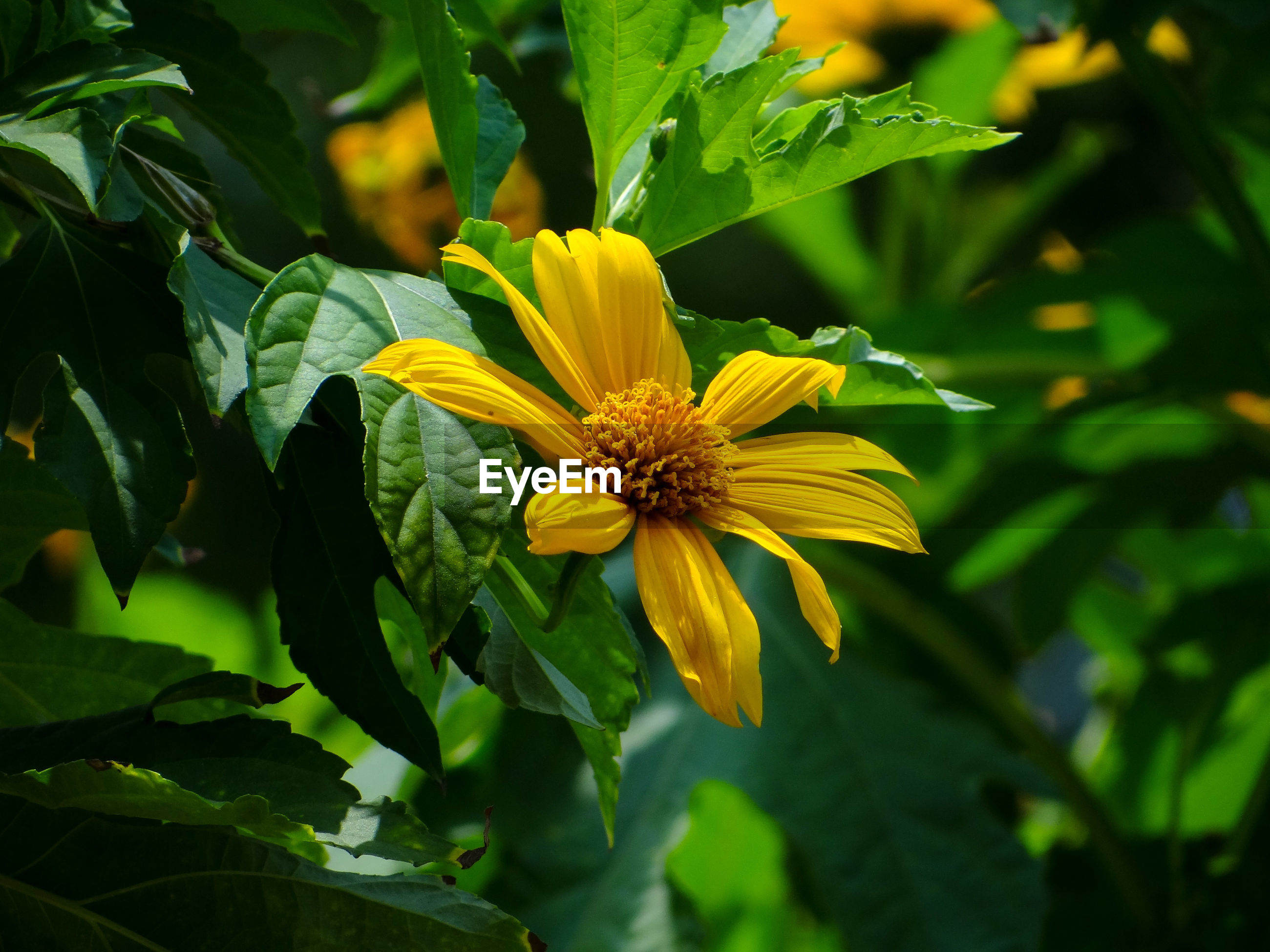 CLOSE-UP OF YELLOW FLOWER AGAINST PLANTS