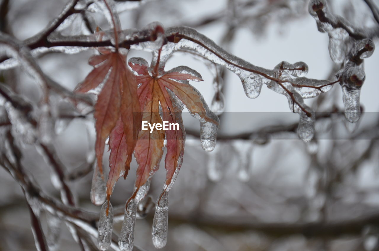 Close-up of icicle on plants