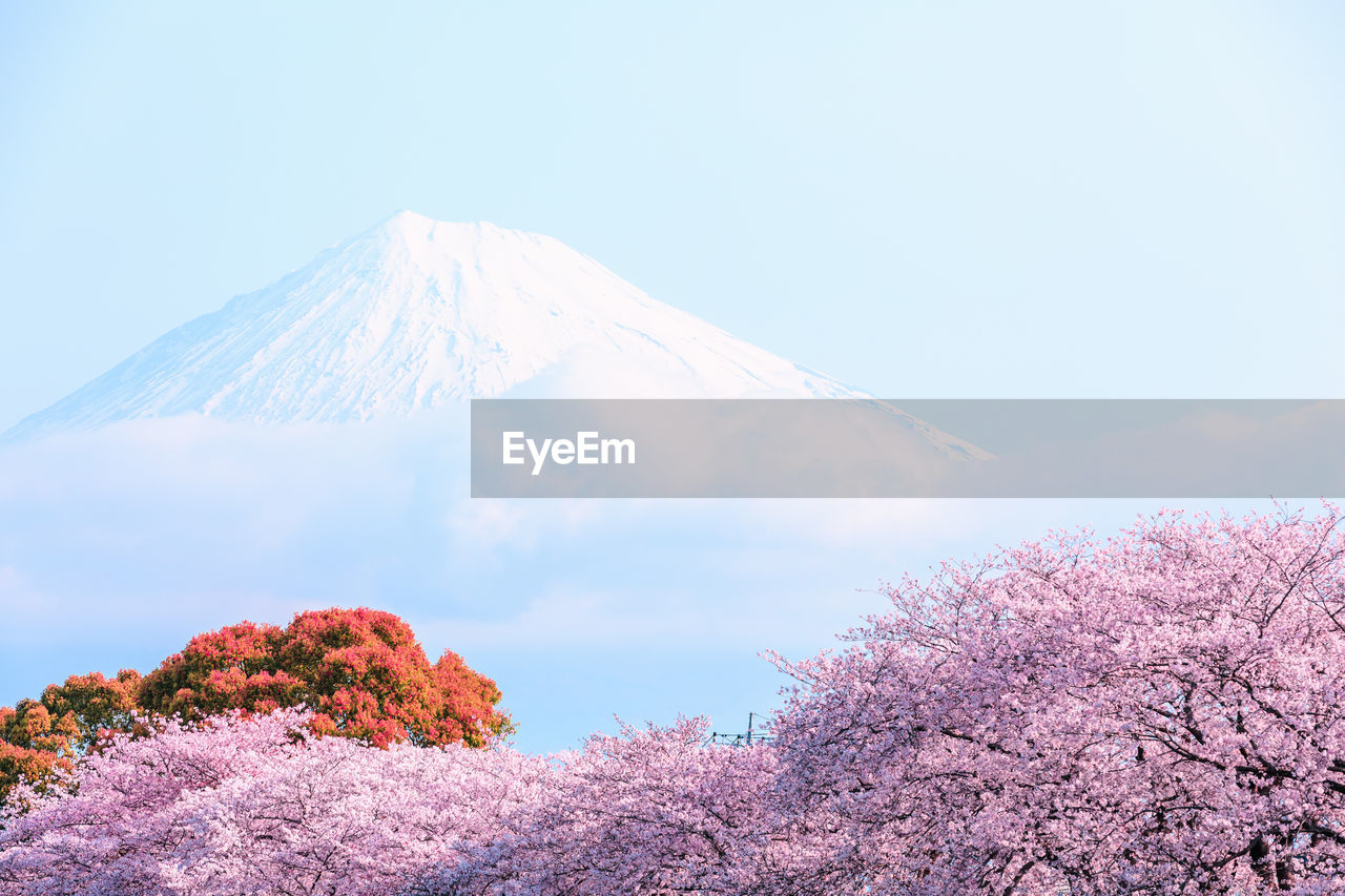 beauty in nature, mountain, sky, volcano, tree, scenics - nature, nature, tranquil scene, no people, tranquility, plant, day, cold temperature, winter, low angle view, non-urban scene, snow, cloud - sky, land, mountain peak, outdoors, snowcapped mountain, cherry blossom