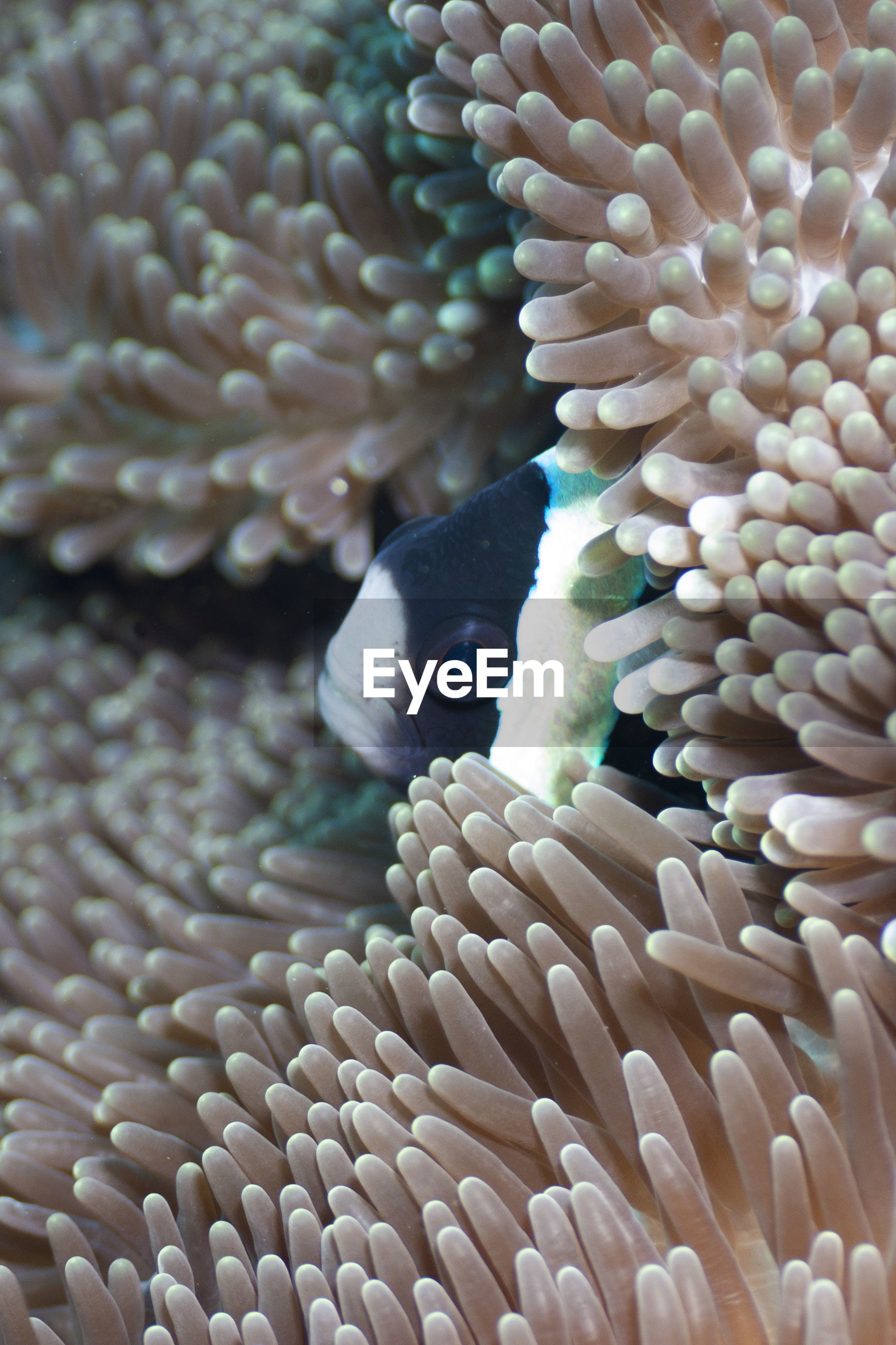 CLOSE-UP OF CORAL IN FISH
