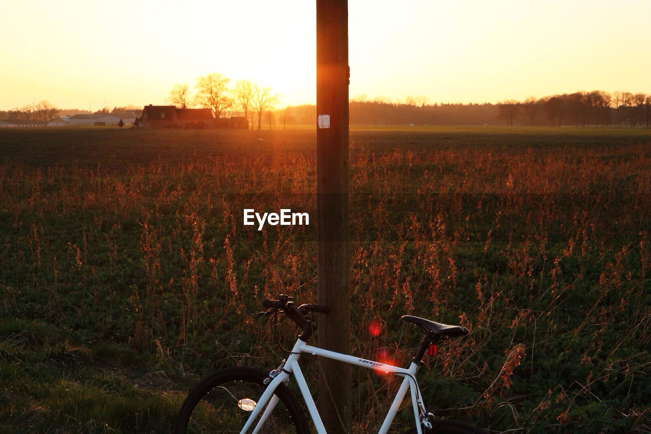 sunset, grass, field, tree, tranquility, landscape, growth, clear sky, nature, orange color, bicycle, transportation, tranquil scene, plant, scenics, mode of transport, sky, sunlight, beauty in nature, land vehicle