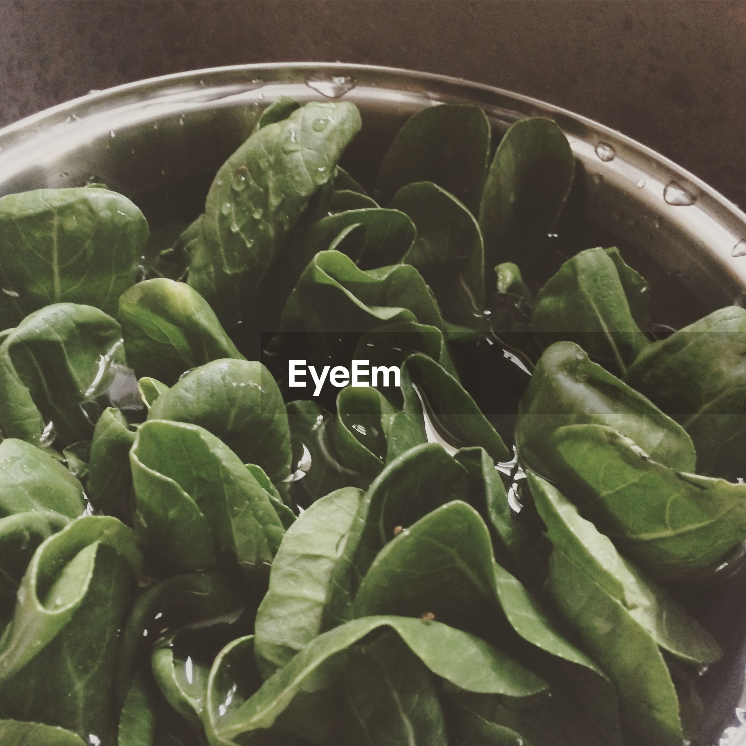 Close-up of bok choy in metal container