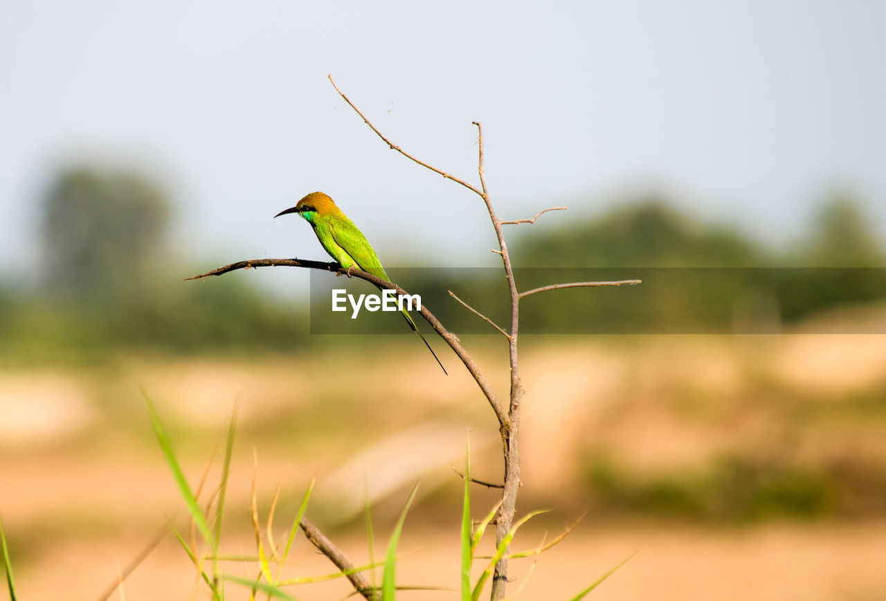 plant, growth, focus on foreground, nature, beauty in nature, no people, close-up, day, green color, land, outdoors, tranquility, selective focus, animals in the wild, animal themes, animal wildlife, animal, field, bird, one animal