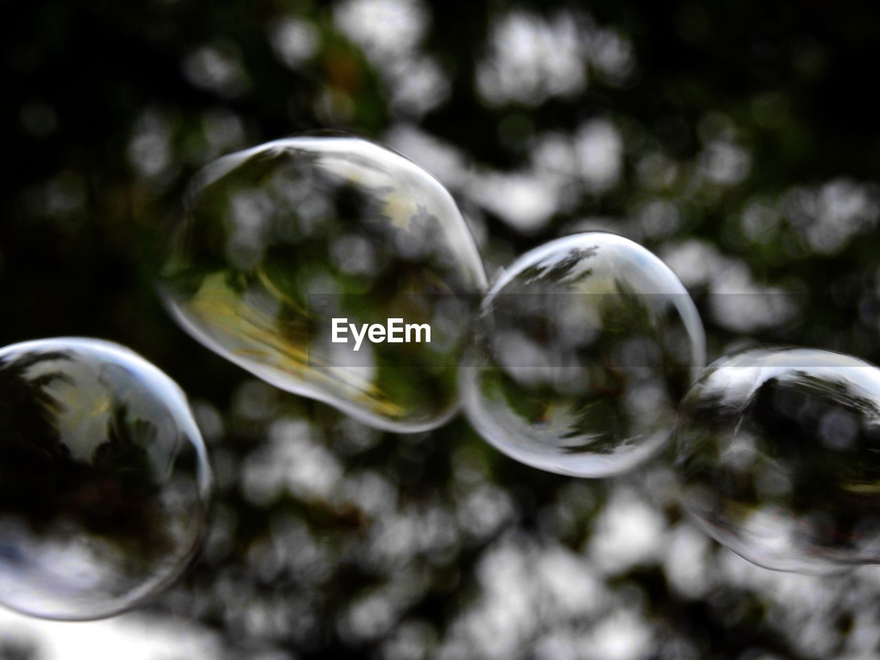 bubble, fragility, bubble wand, shape, reflection, no people, shiny, crystal ball, selective focus, close-up, ball, curve, outdoors, nature, day, refraction, spectrum
