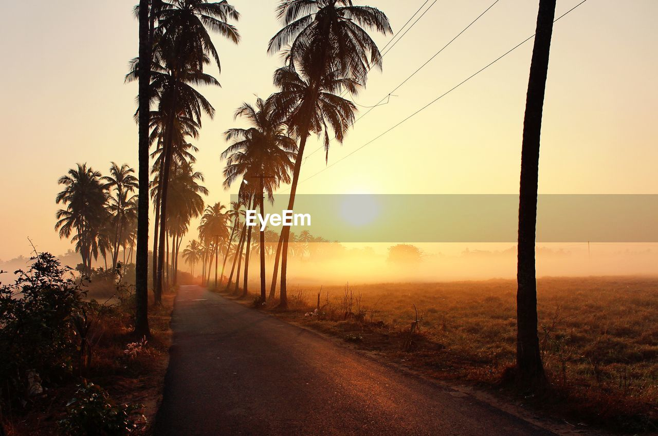 tree, sunset, sun, palm tree, nature, beauty in nature, scenics, tranquility, tranquil scene, no people, sunlight, outdoors, tree trunk, growth, road, landscape, sky, day