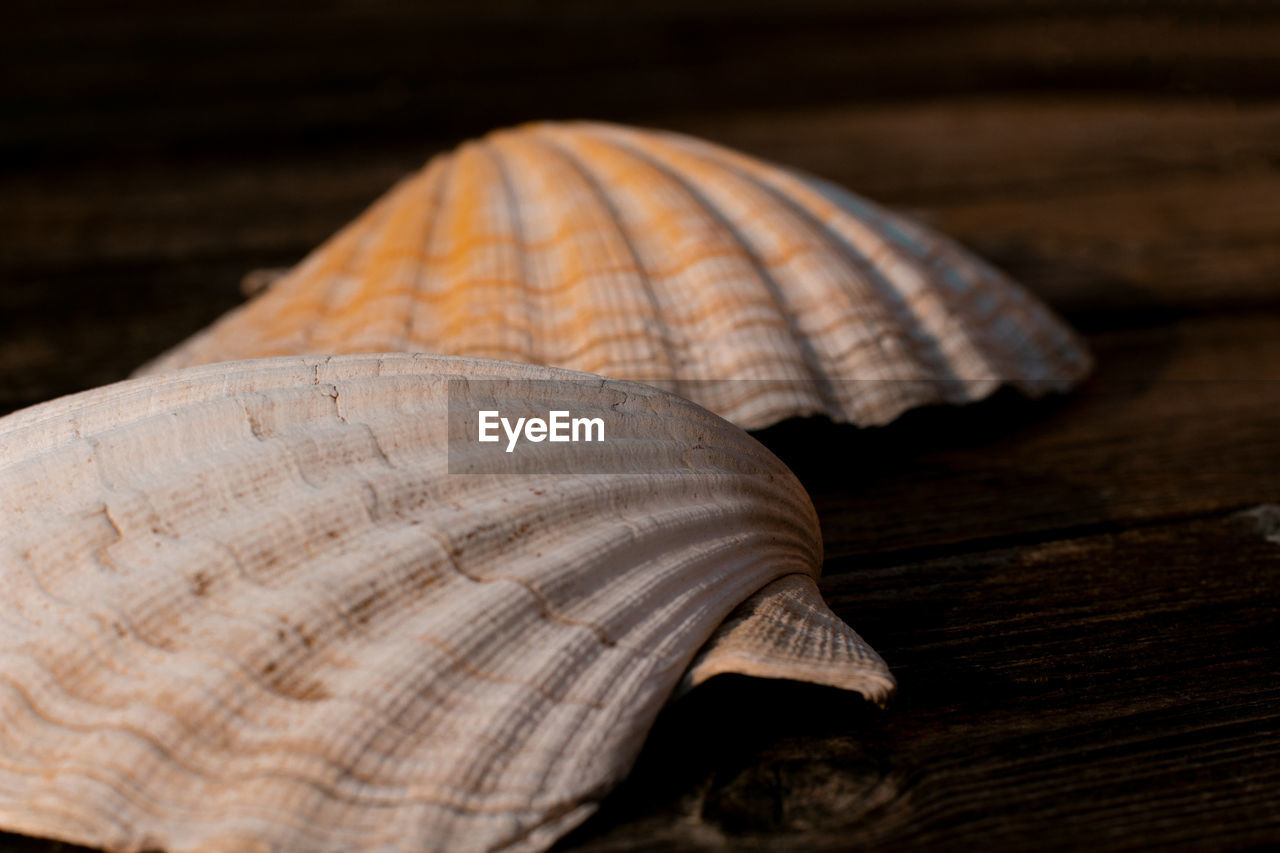 shell, close-up, animal shell, still life, pattern, animal, no people, animal wildlife, brown, seashell, wood - material, nature, indoors, natural pattern, selective focus, textured, animal themes, beauty in nature, invertebrate, table