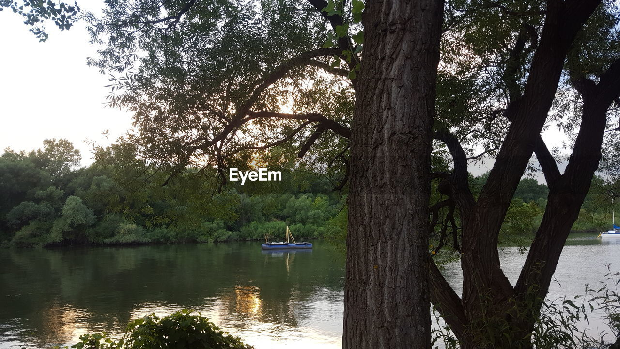tree, tree trunk, nature, water, lake, beauty in nature, tranquil scene, scenics, nautical vessel, branch, tranquility, outdoors, transportation, day, growth, no people, sky