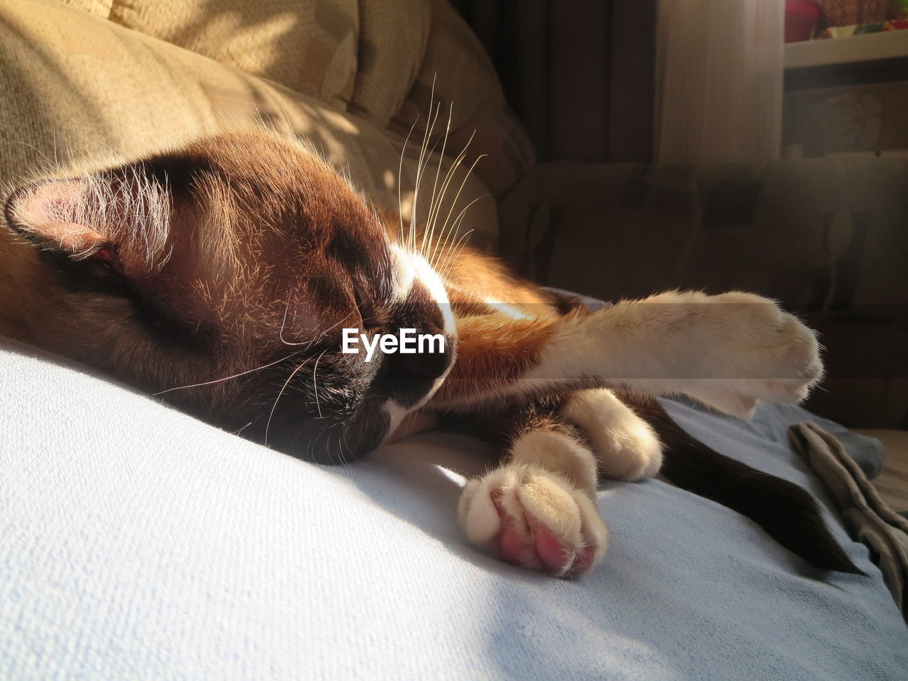 pets, domestic, domestic animals, mammal, one animal, cat, animal themes, domestic cat, animal, feline, vertebrate, relaxation, furniture, indoors, bed, resting, close-up, lying down, whisker, no people