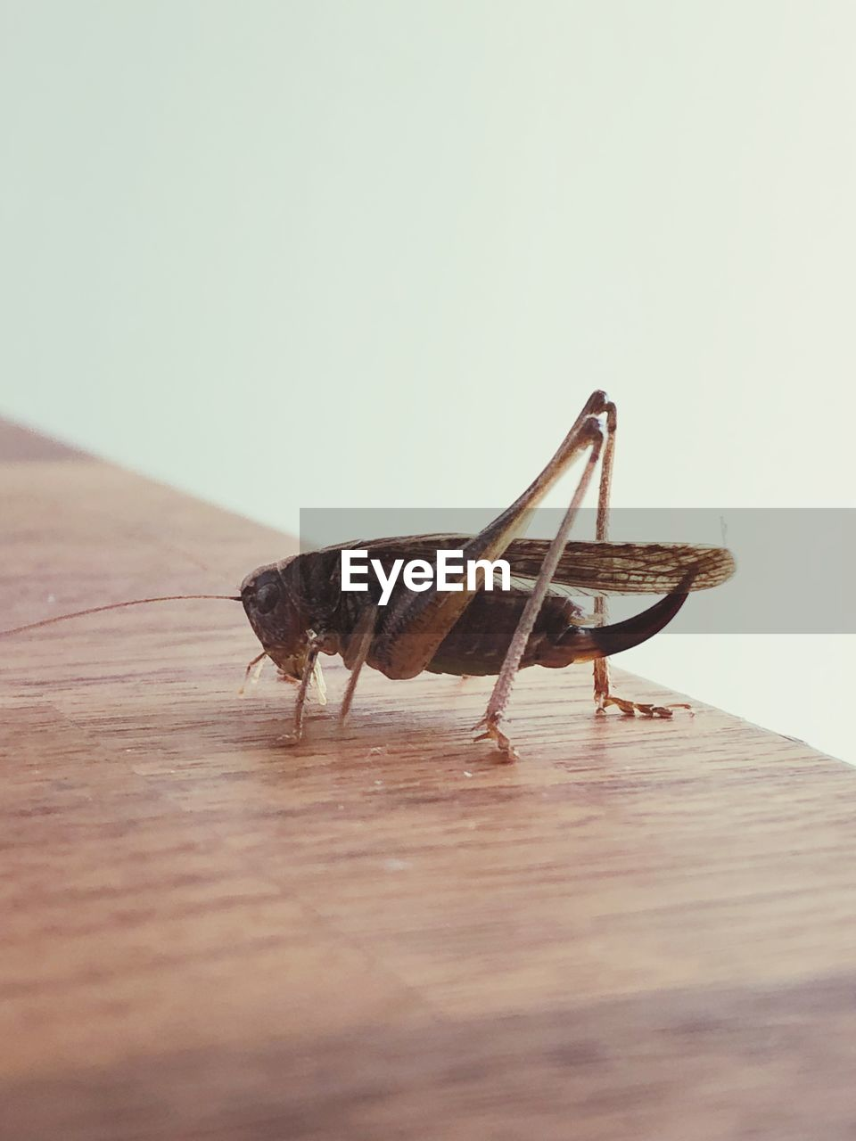 animal themes, animal, one animal, animals in the wild, wood - material, animal wildlife, insect, invertebrate, close-up, no people, copy space, table, selective focus, indoors, nature, day, zoology, wall - building feature