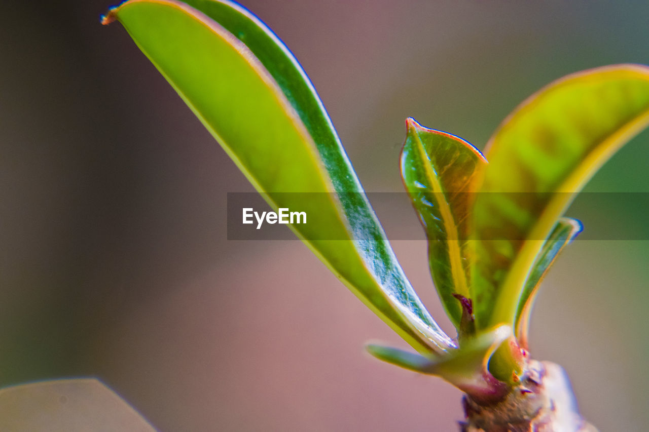 plant, growth, close-up, beauty in nature, green color, freshness, no people, nature, focus on foreground, leaf, plant part, flower, selective focus, vulnerability, flowering plant, day, fragility, outdoors, beginnings, new life