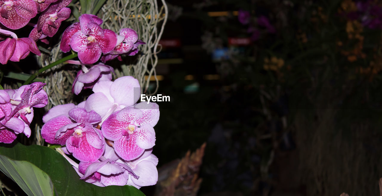 flower, freshness, pink color, beauty in nature, fragility, petal, nature, growth, purple, outdoors, focus on foreground, close-up, no people, plant, flower head, day, blooming