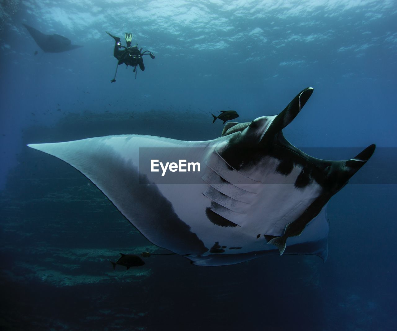 Low angle view of man swimming over stingray in sea