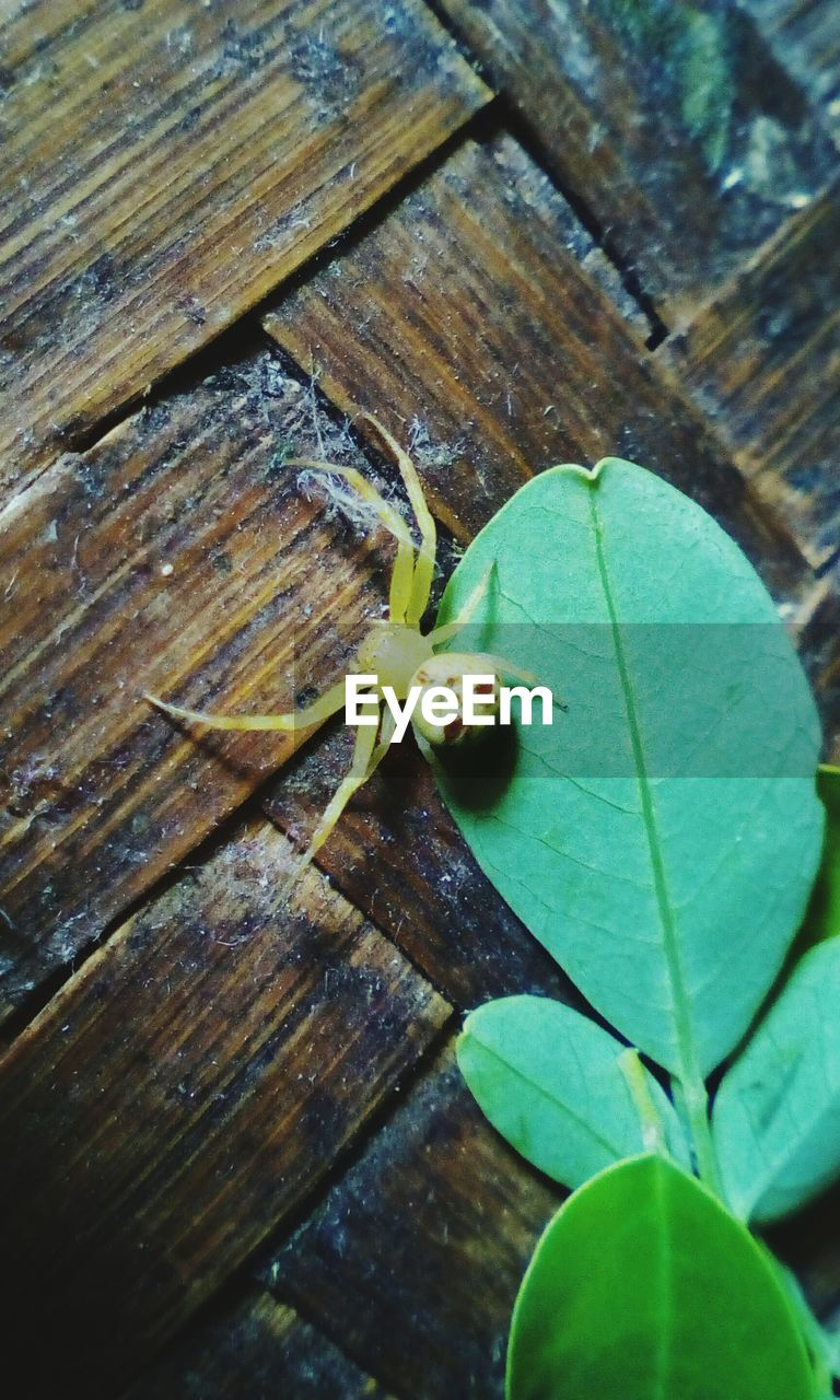 leaf, one animal, animal themes, green color, no people, close-up, high angle view, animals in the wild, wood - material, day, nature, outdoors