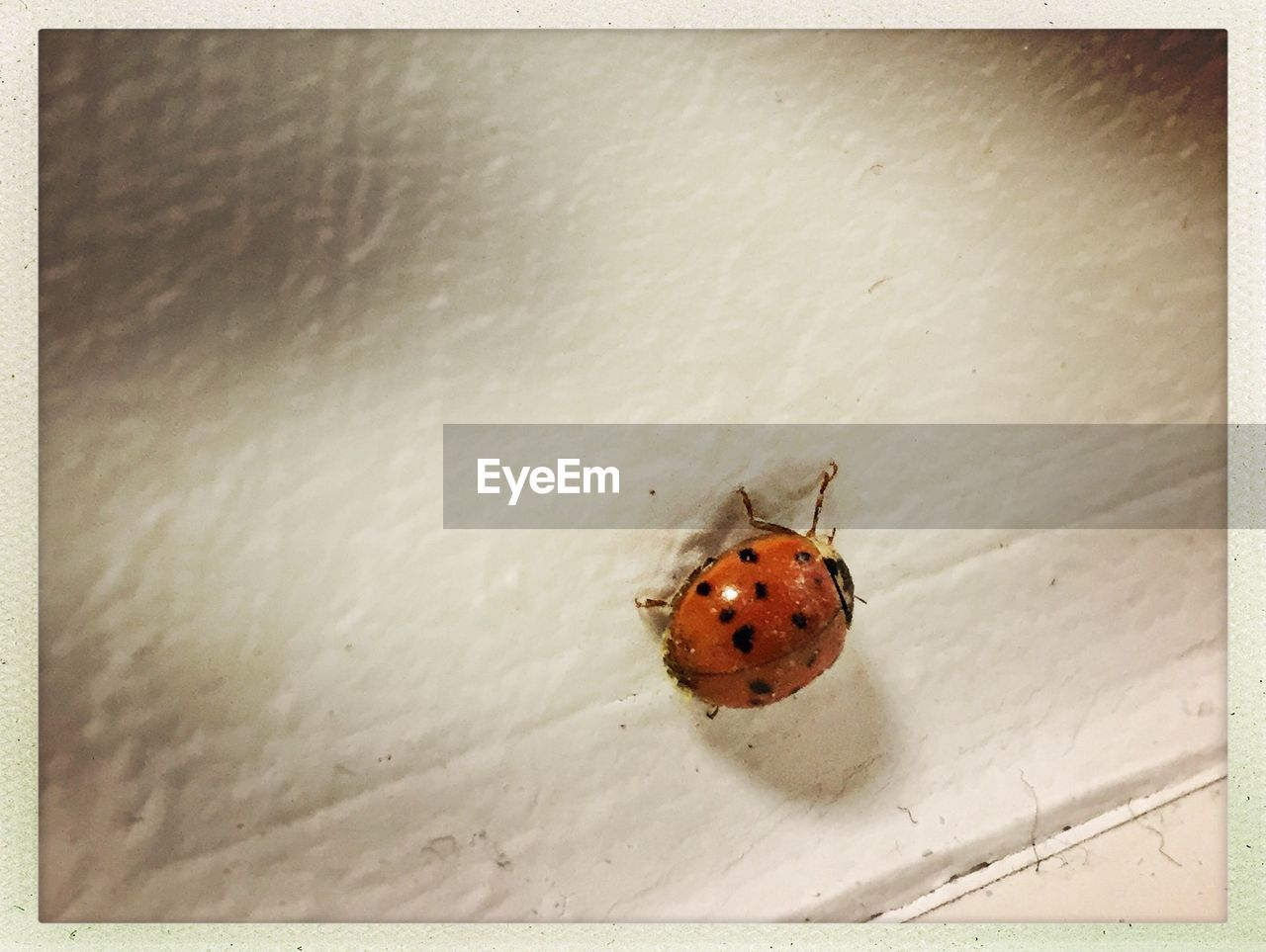 animals in the wild, one animal, animal themes, insect, wildlife, no people, high angle view, close-up, day, ladybug, tiny, outdoors, nature
