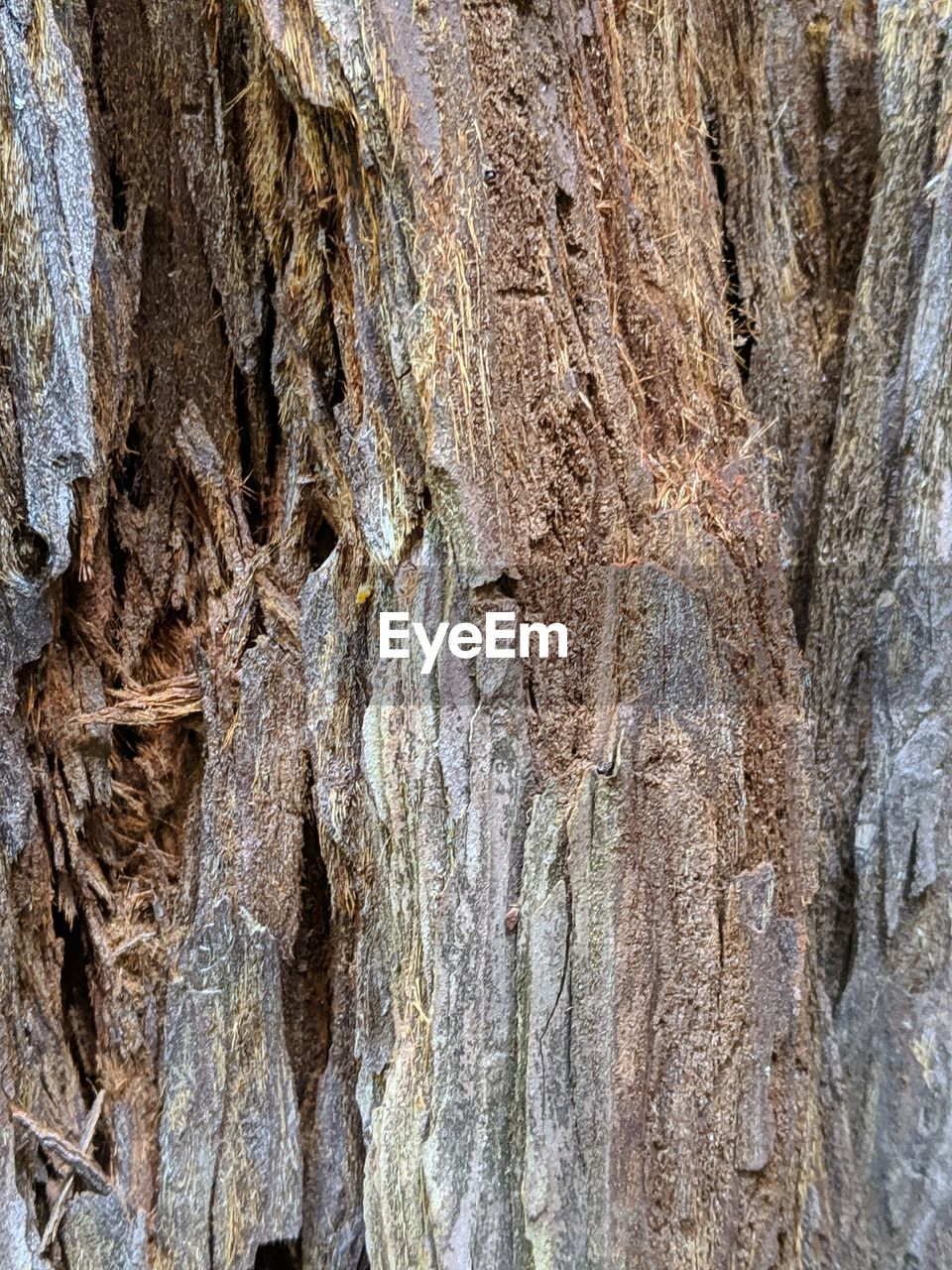 tree trunk, trunk, textured, full frame, tree, backgrounds, no people, plant, plant bark, nature, rough, close-up, day, outdoors, natural pattern, pattern, growth, brown, wood - material, beauty in nature, bark, textured effect