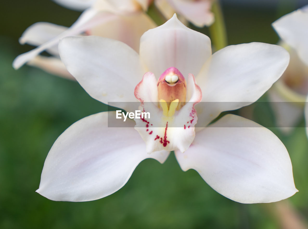 petal, flower, fragility, beauty in nature, white color, freshness, flower head, growth, close-up, nature, focus on foreground, no people, day, stamen, outdoors, blooming