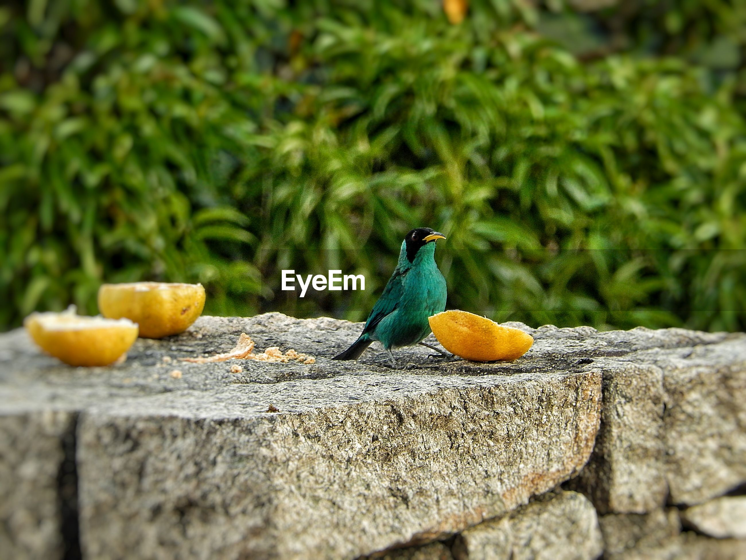 Bird by food on retaining wall