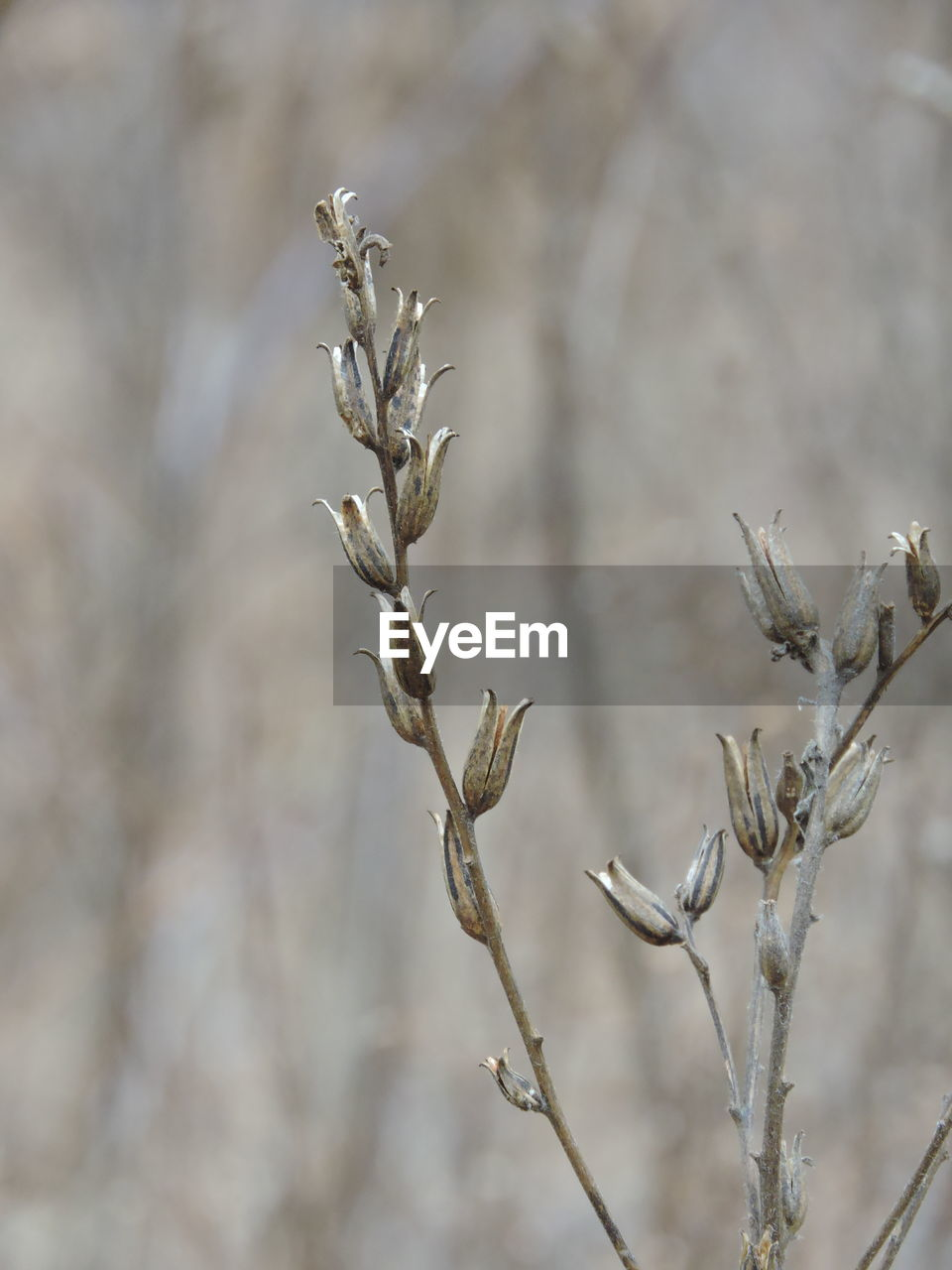 dead plant, nature, day, dried plant, plant, no people, outdoors, branch, growth, beauty in nature, close-up, fragility