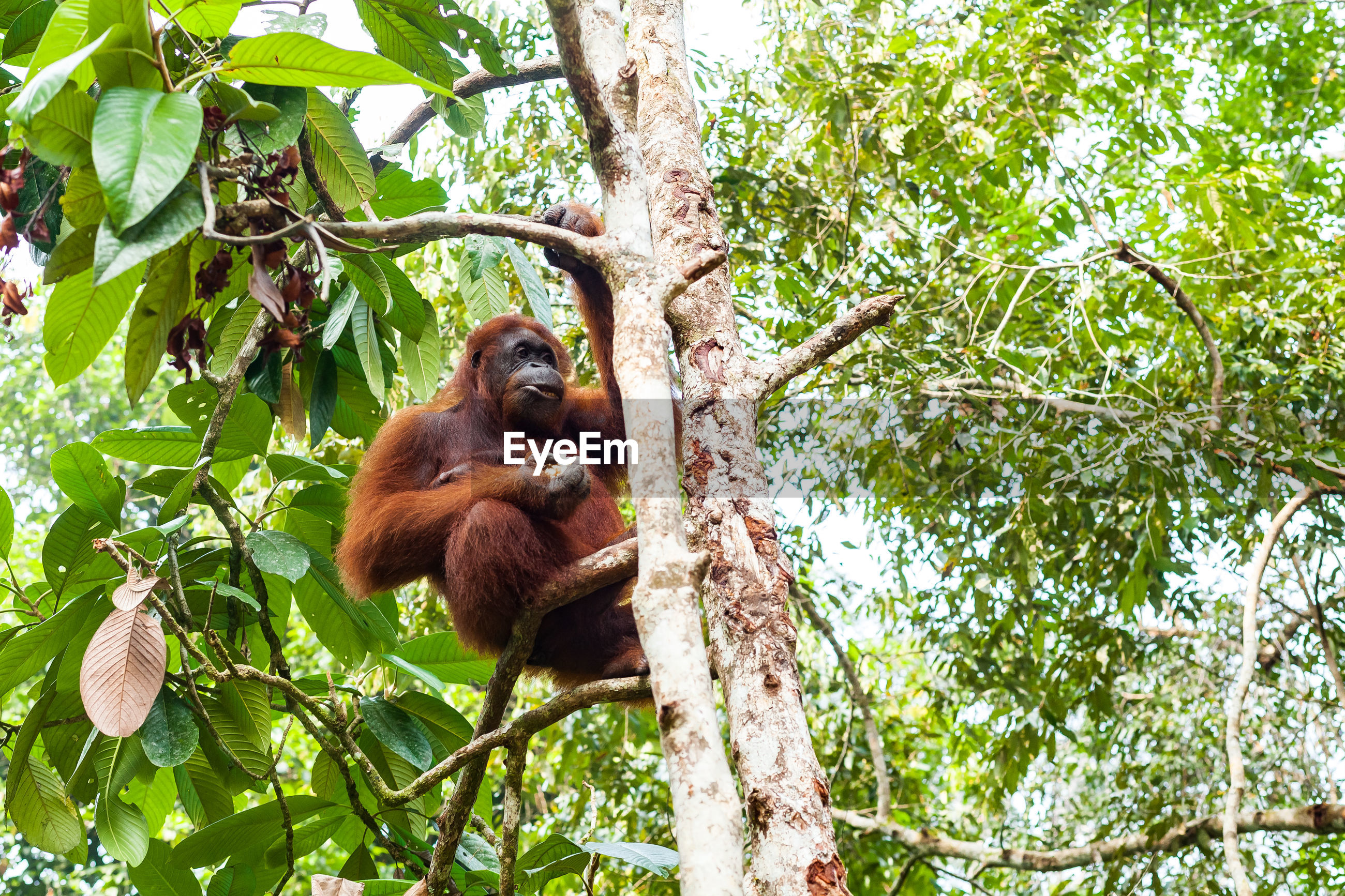 LOW ANGLE VIEW OF MONKEY ON TREE BRANCH