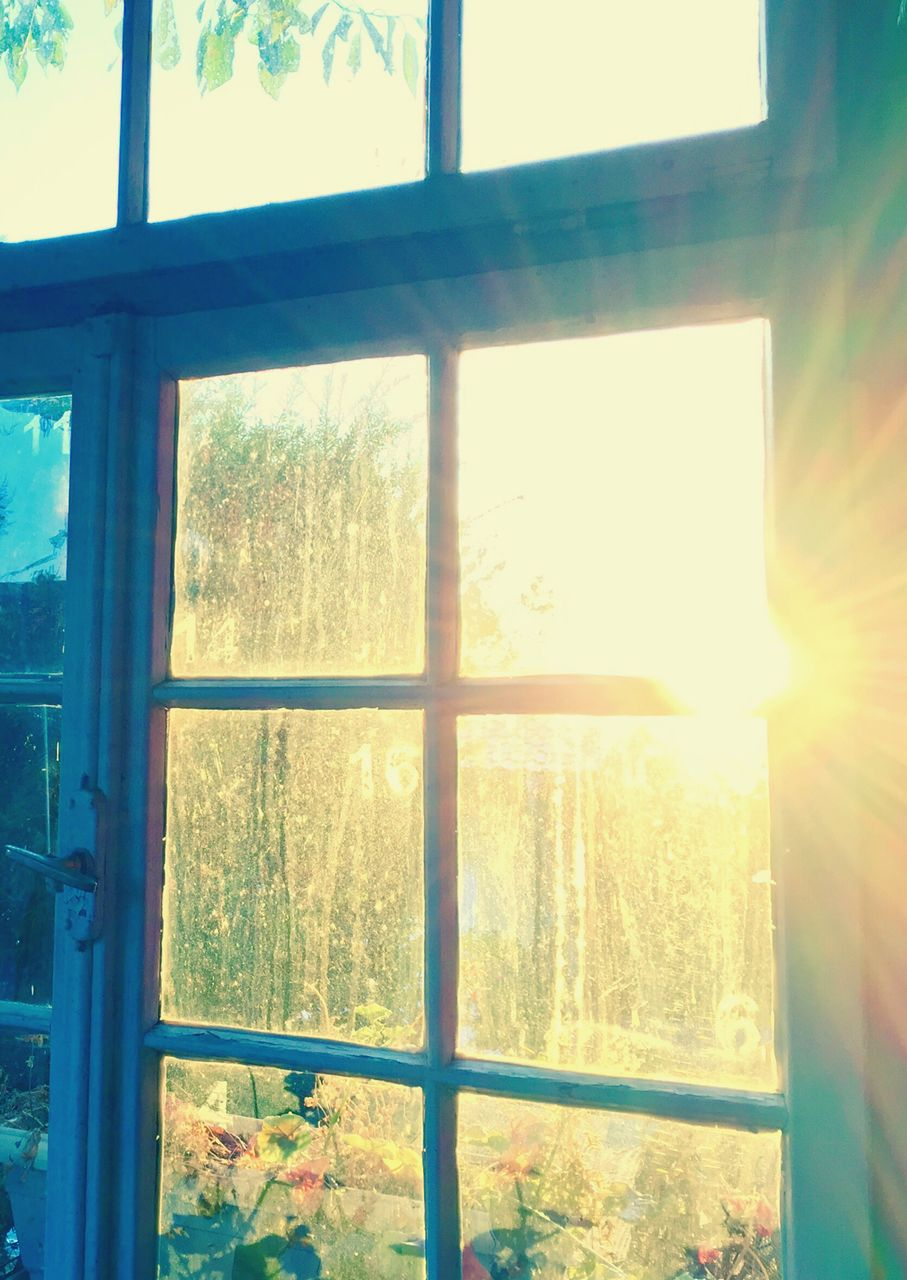 window, tree, nature, sunlight, sun, indoors, no people, curtain, looking through window, sunset, day, scenics, beauty in nature, architecture, sky, close-up