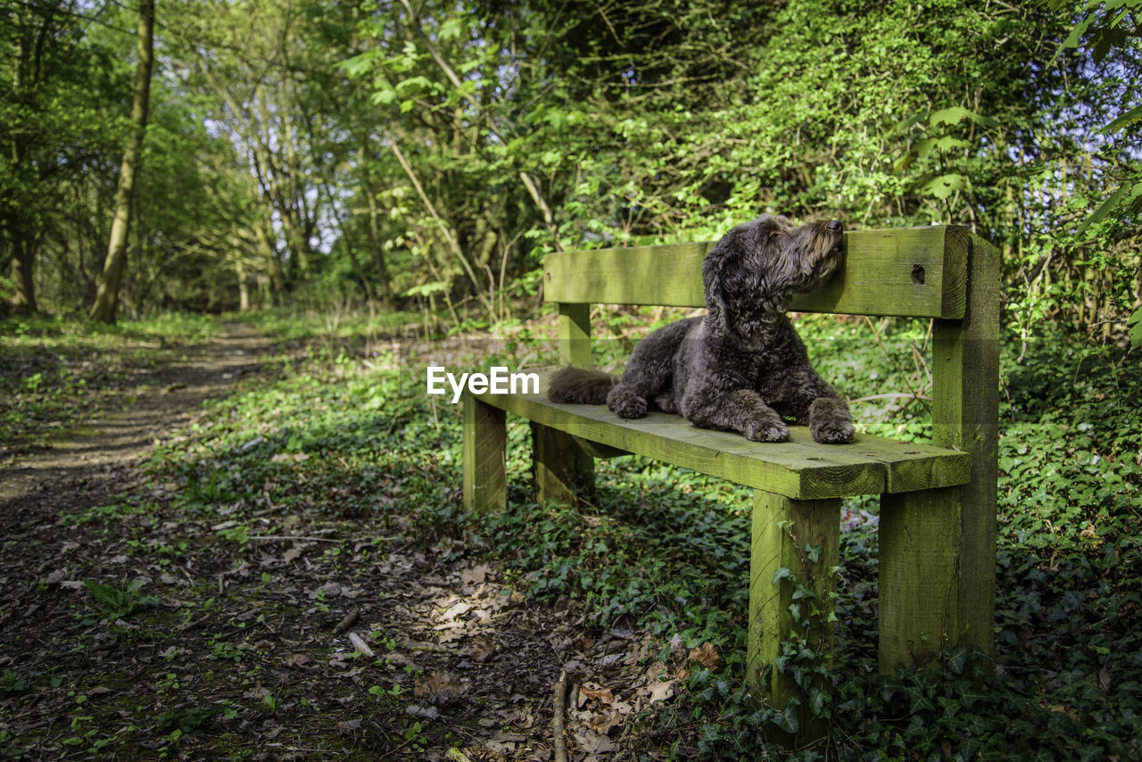 tree, forest, plant, land, seat, nature, day, mammal, wood - material, no people, animal themes, animal, one animal, green color, bench, outdoors, solitude, tranquility, sitting, woodland