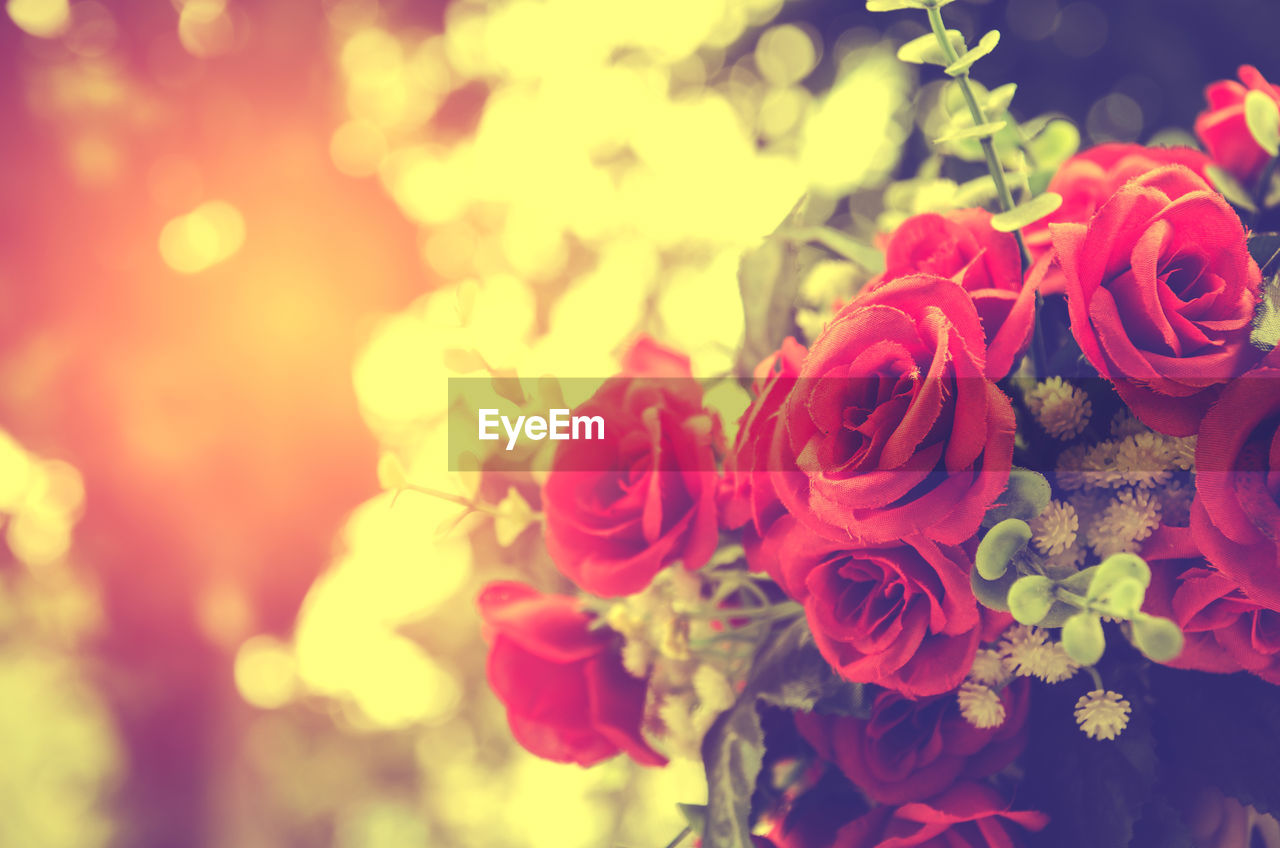 flower, rose - flower, petal, beauty in nature, nature, no people, flower head, fragility, bouquet, freshness, close-up, outdoors, growth, day