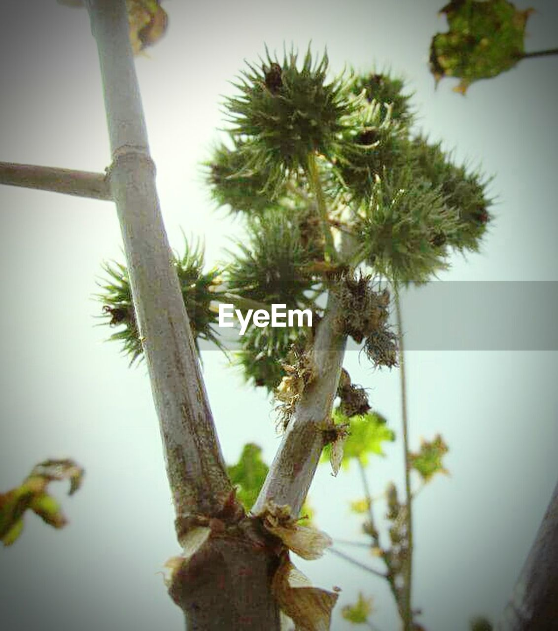tree, growth, nature, no people, low angle view, day, beauty in nature, plant, outdoors, close-up, sky, branch