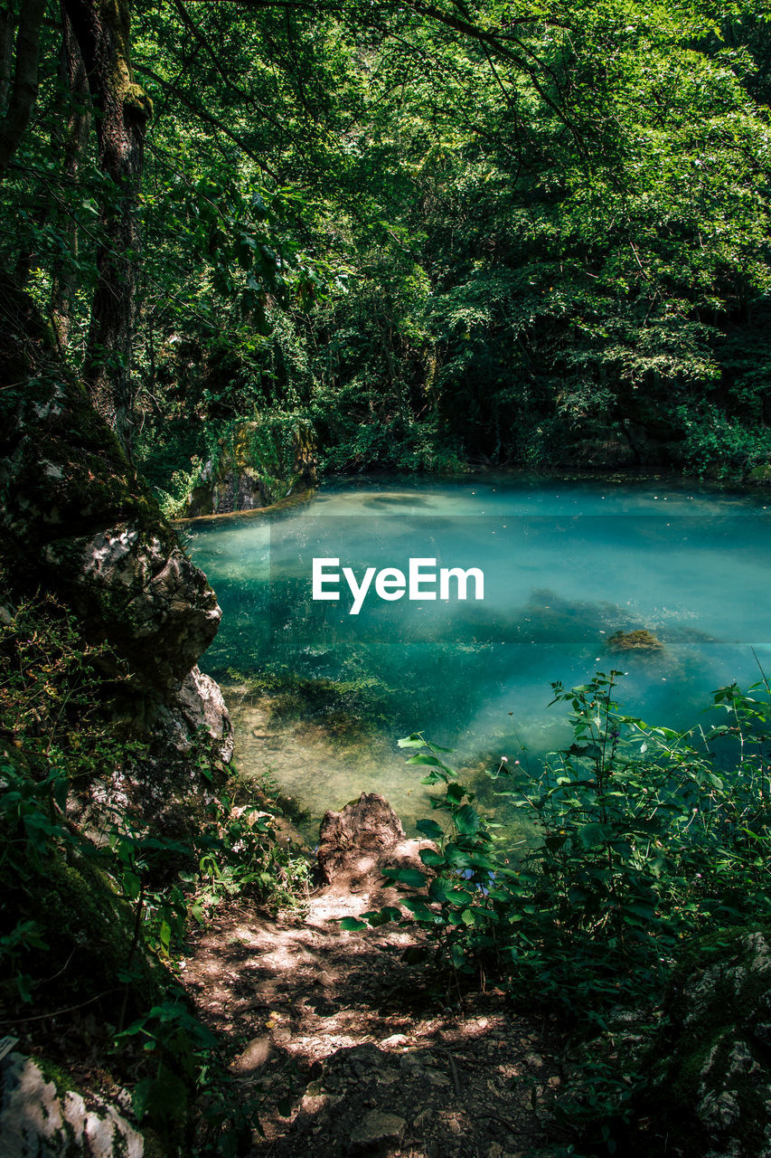 tree, water, forest, plant, nature, tranquility, land, scenics - nature, beauty in nature, no people, tranquil scene, day, environment, river, outdoors, growth, foliage, rainforest, lush foliage, flowing, flowing water, turquoise colored