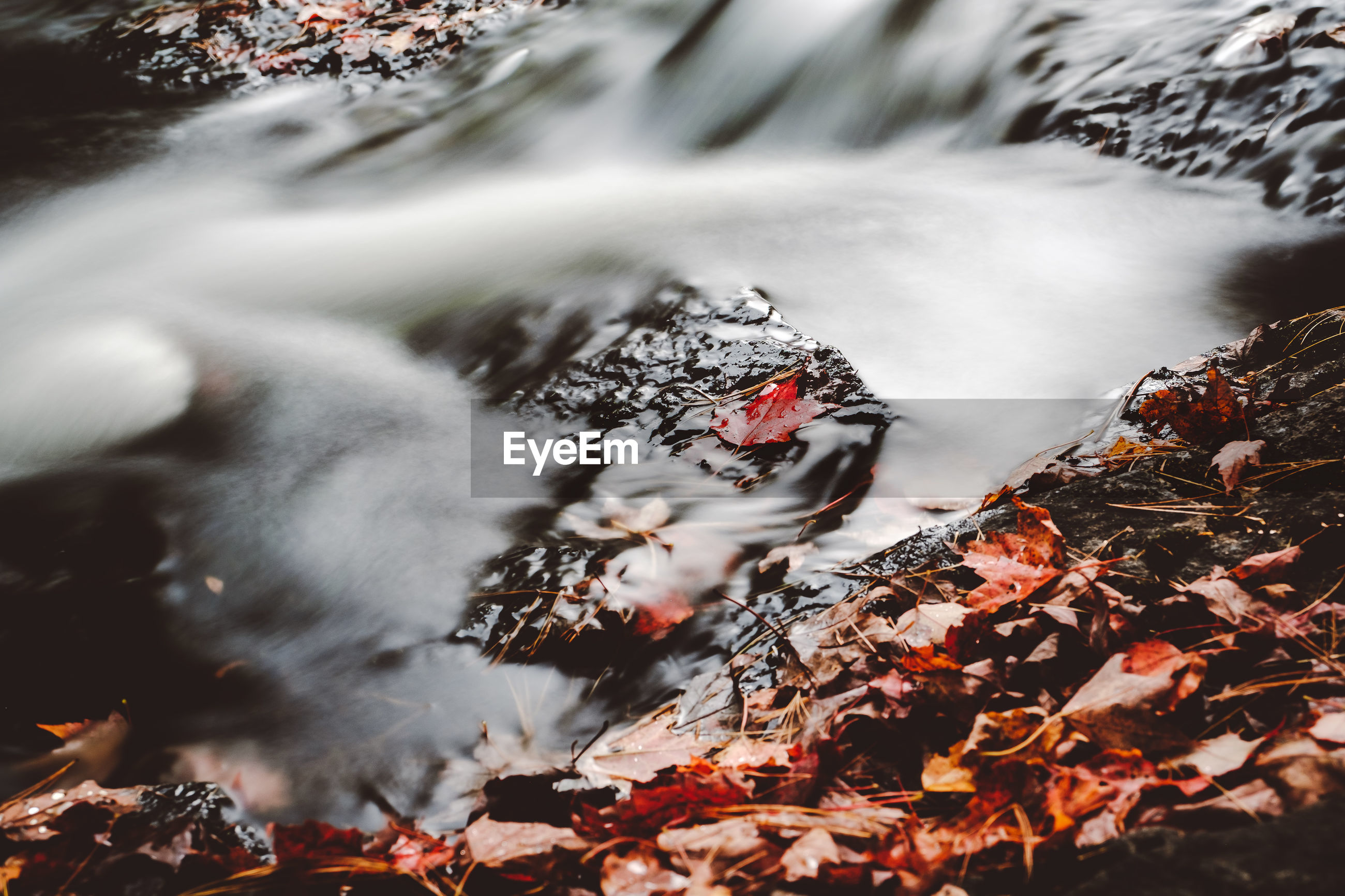 autumn, water, nature, leaf, no people, outdoors, one animal, animal themes, day, lake, change, pets, beauty in nature, close-up, mammal, bird