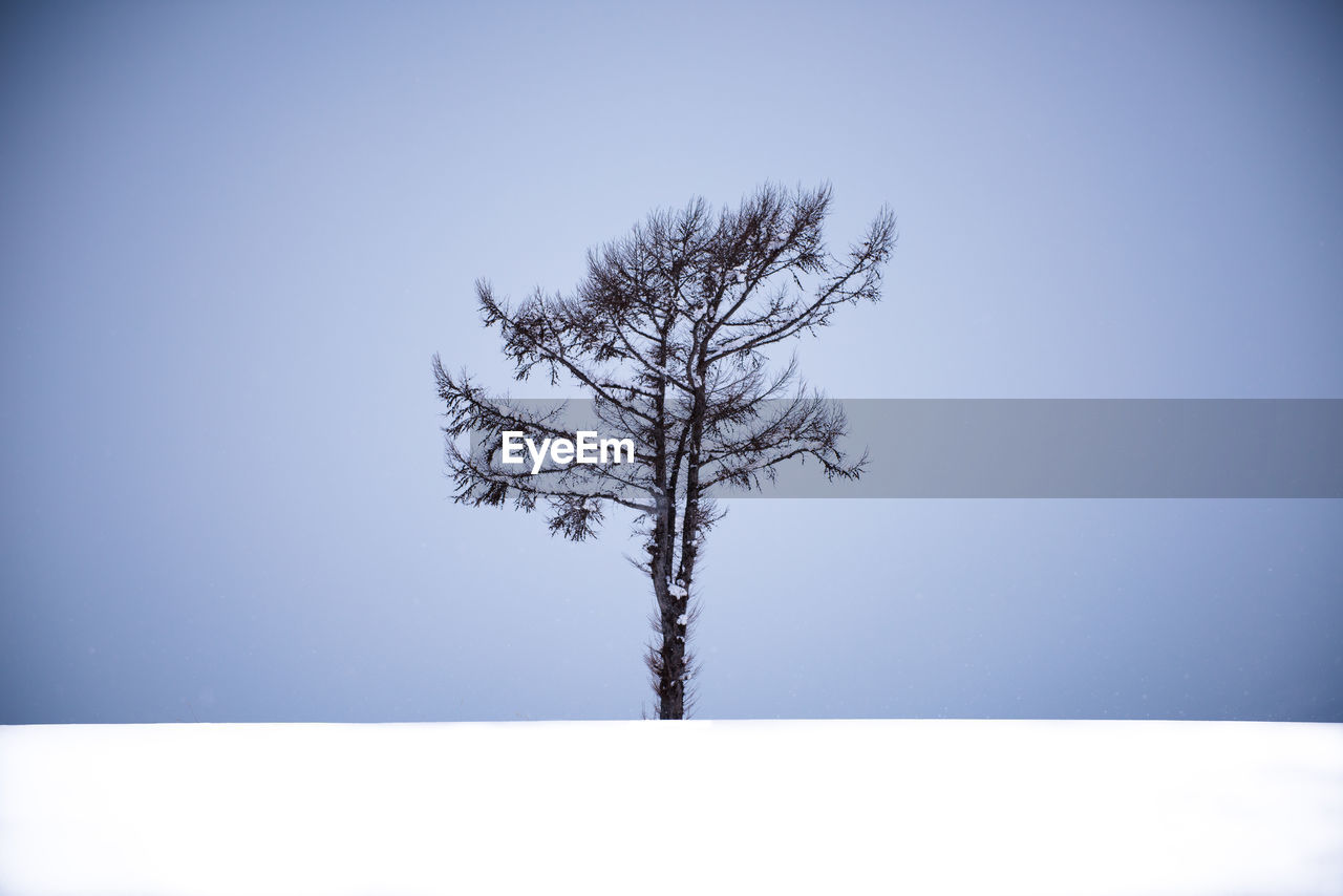 tranquility, clear sky, tranquil scene, nature, beauty in nature, cold temperature, branch, bare tree, tree, lone, day, outdoors, winter, blue, tree trunk, scenics, no people, snow