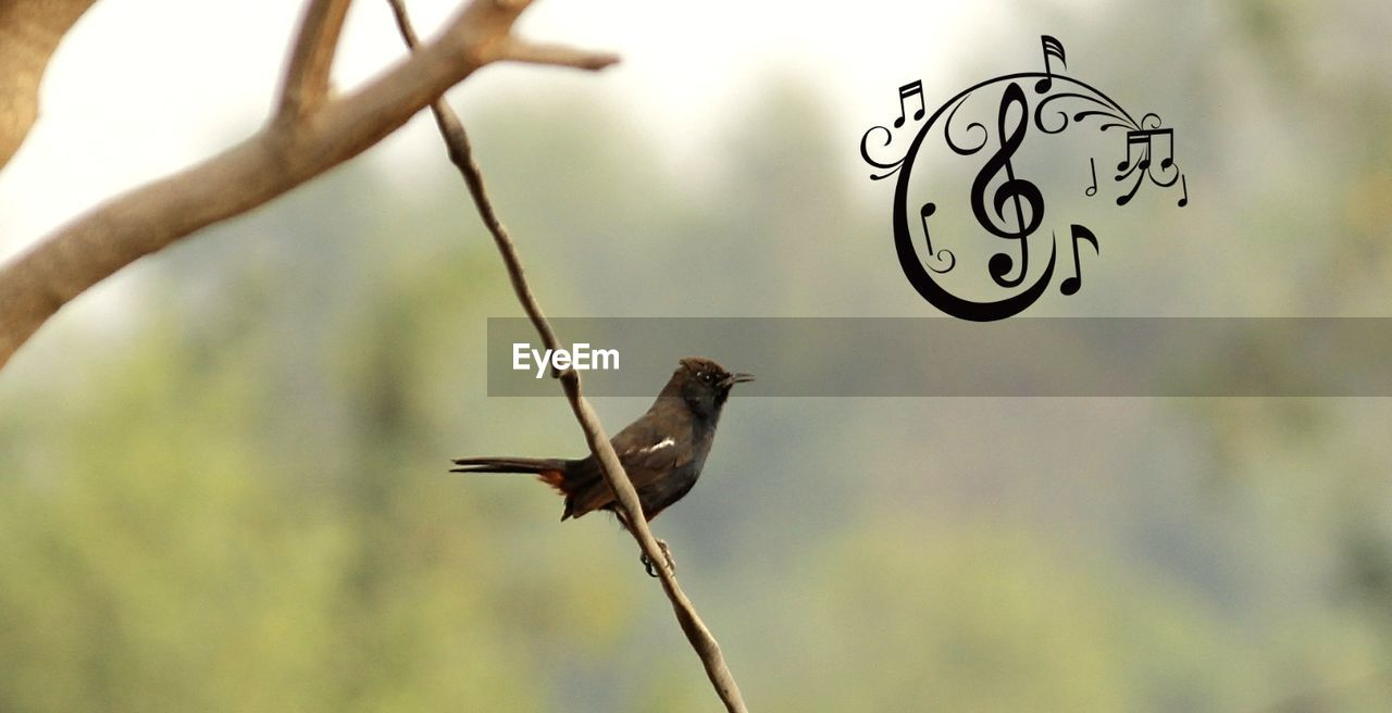 bird, flying, no people, outdoors, day, nature, animal themes