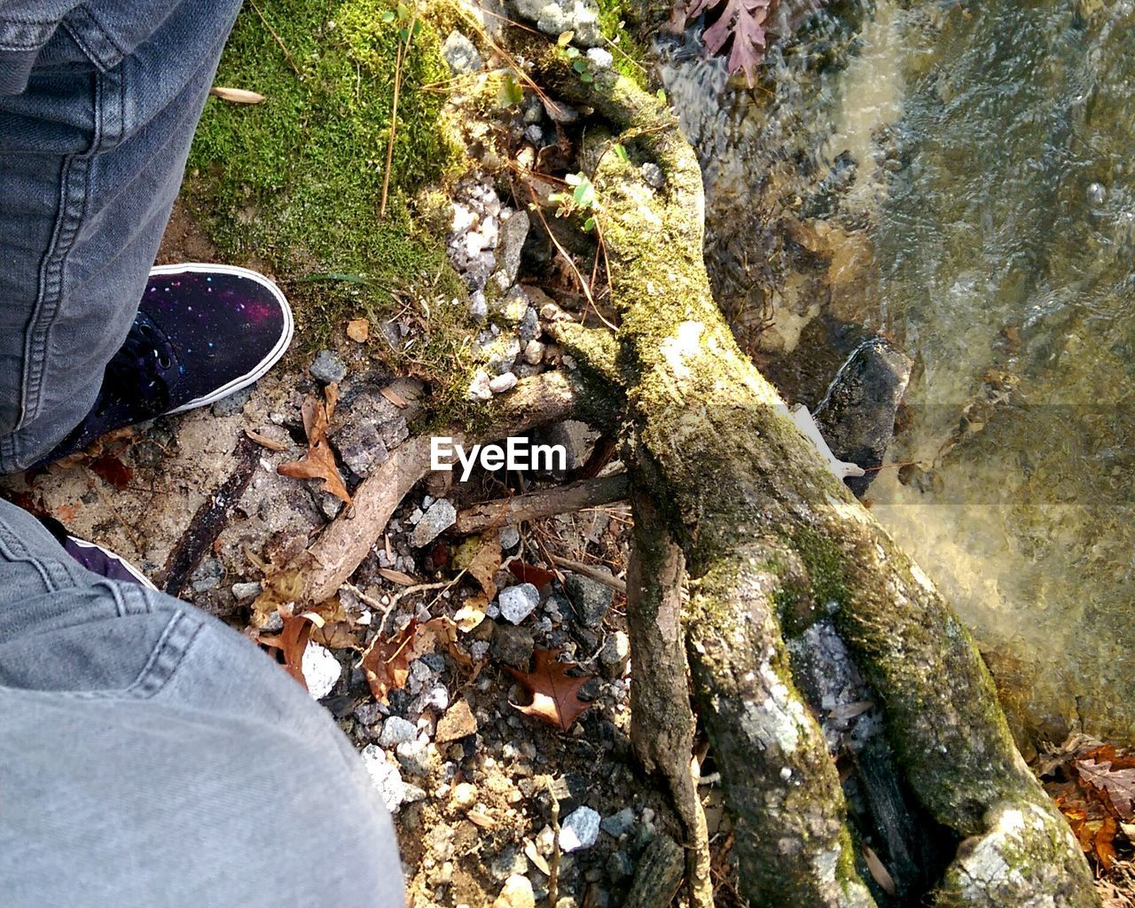 low section, human leg, shoe, one person, human foot, real people, jeans, standing, human body part, high angle view, day, rock - object, lifestyles, outdoors, leisure activity, men, leaf, nature, close-up, one man only, only men, adult, people, adults only