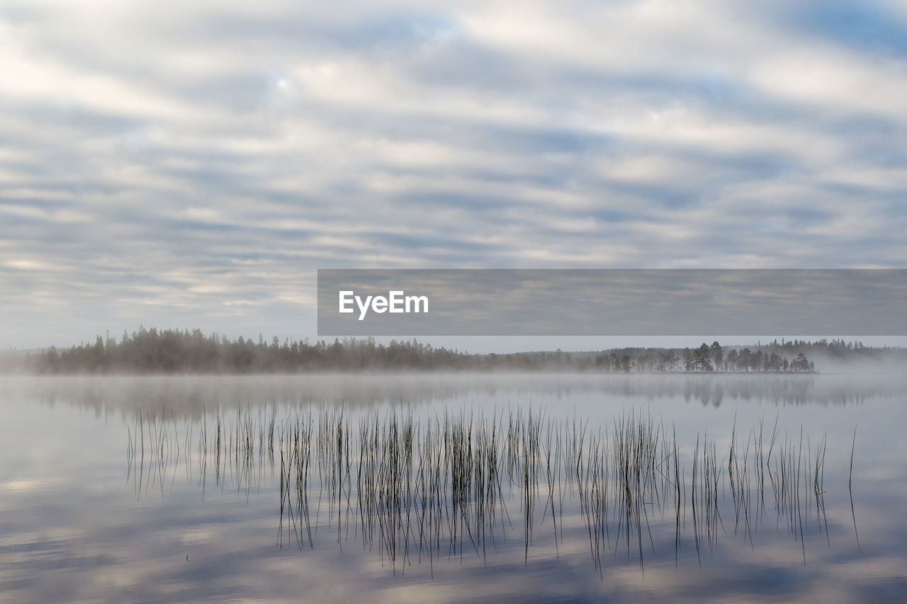 tranquility, water, cloud - sky, sky, beauty in nature, tranquil scene, lake, scenics - nature, no people, plant, reflection, tree, nature, waterfront, non-urban scene, day, outdoors, fog, reflection lake