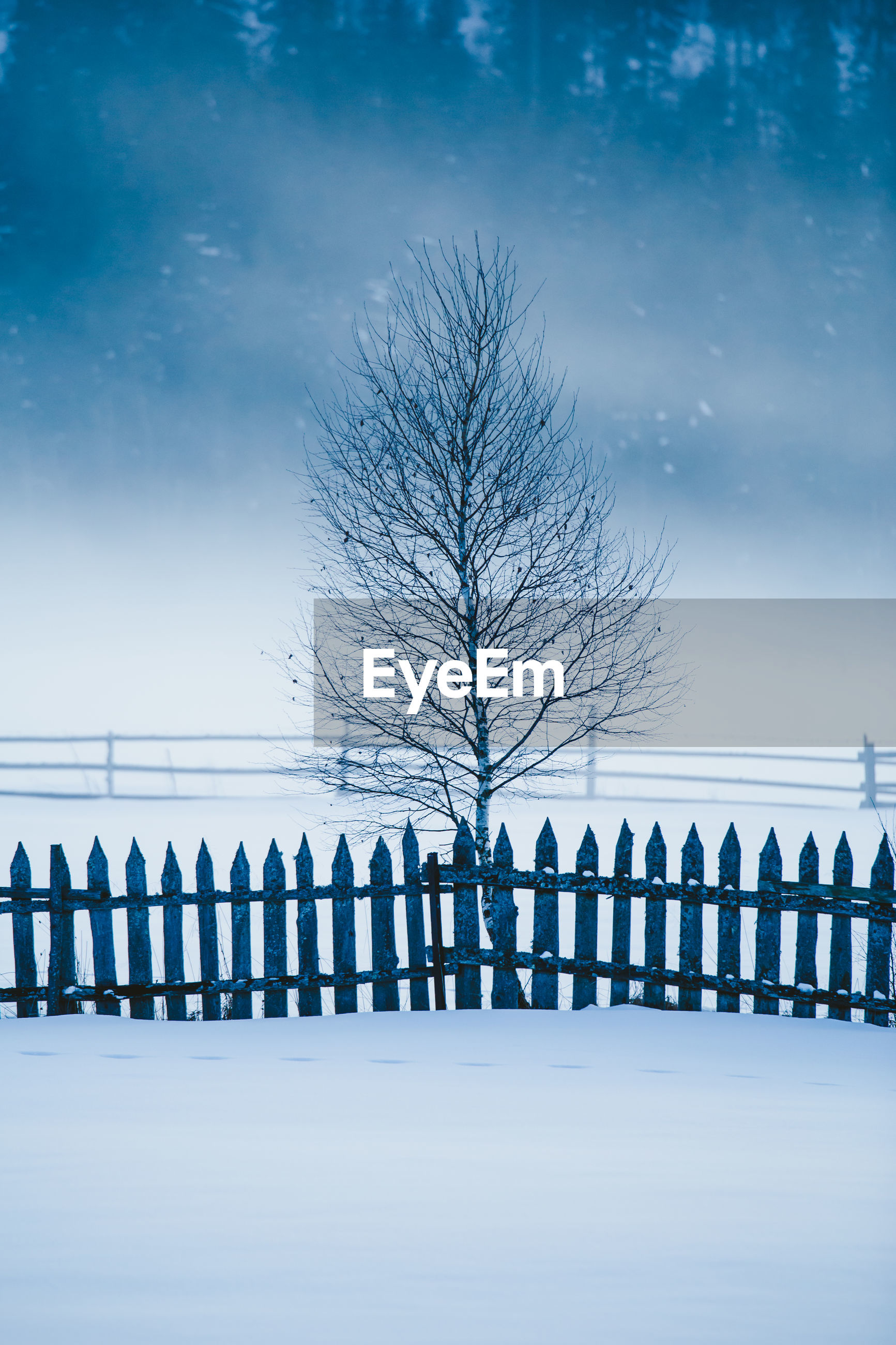 BARE TREE IN SNOW AGAINST SKY