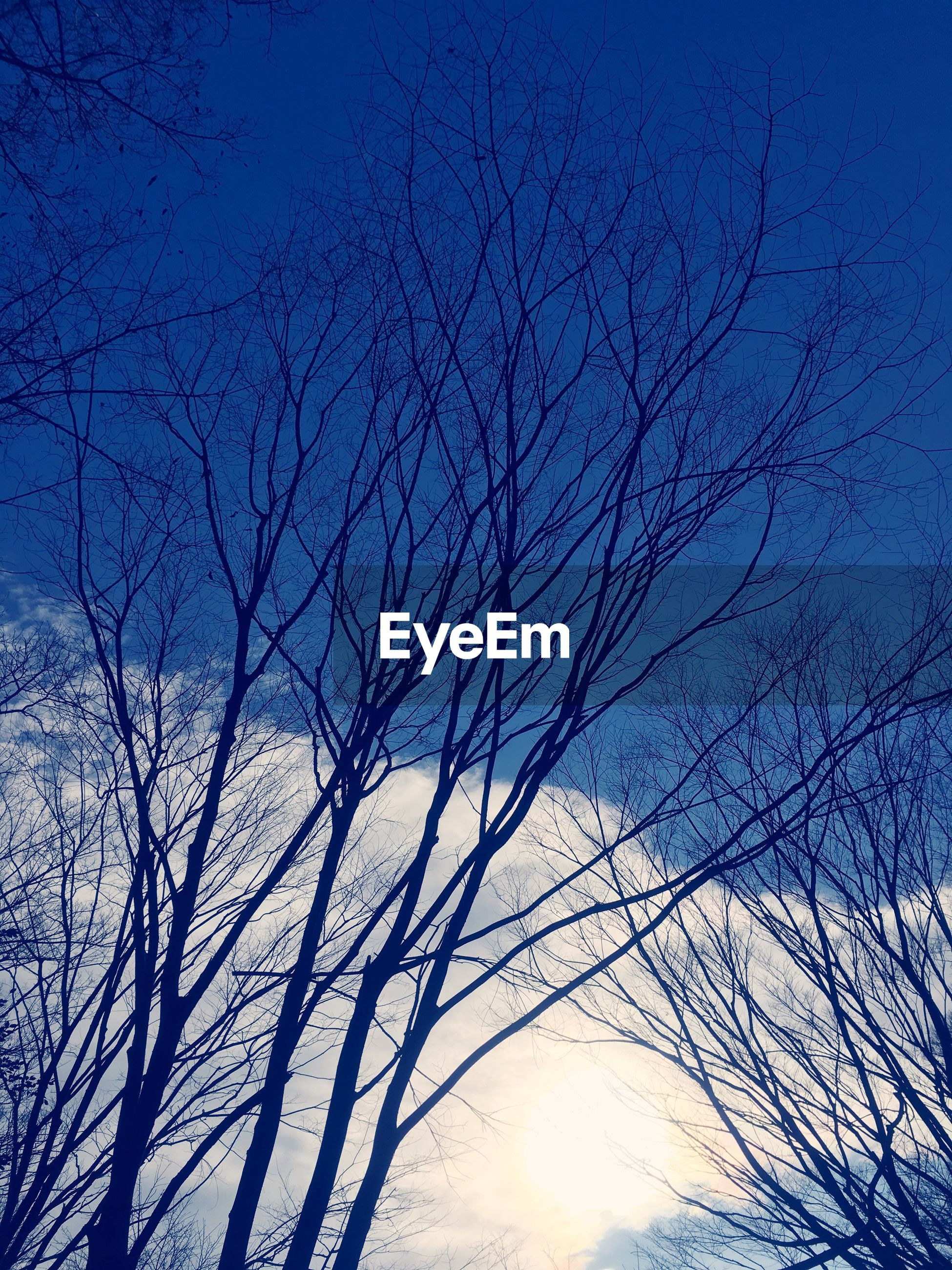 bare tree, low angle view, branch, silhouette, tree, blue, sky, tranquility, beauty in nature, nature, sun, sunset, scenics, clear sky, tranquil scene, sunlight, outdoors, no people, idyllic, dusk