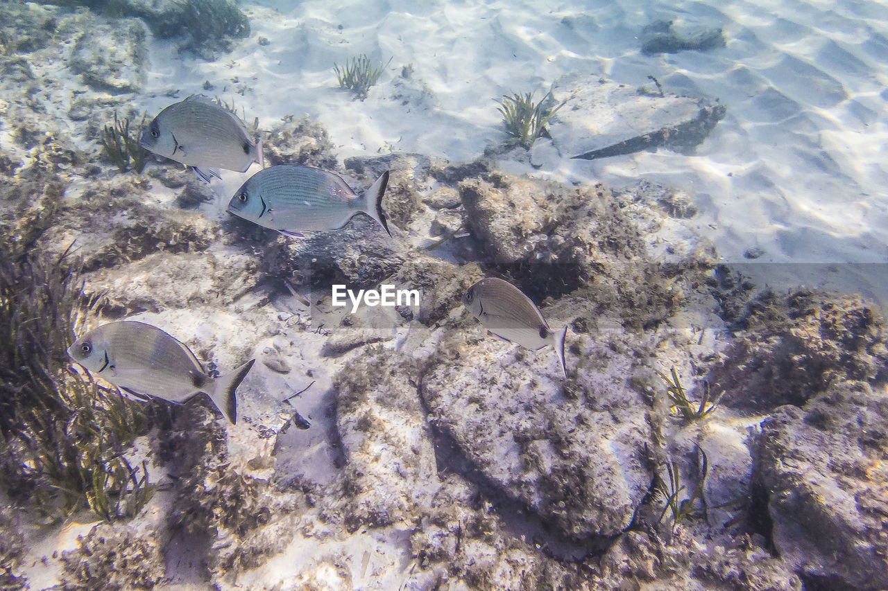 animal, water, animal themes, underwater, animals in the wild, sea, fish, animal wildlife, swimming, sea life, vertebrate, nature, undersea, no people, marine, group of animals, stingray, beauty in nature, high angle view, outdoors