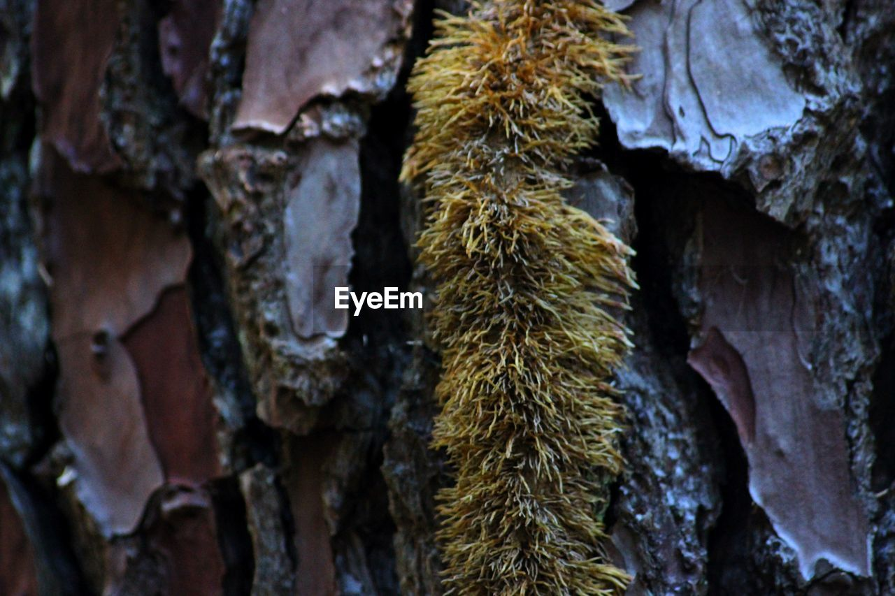 no people, tree trunk, close-up, textured, full frame, nature, backgrounds, day, fungus, growth, outdoors, beauty in nature